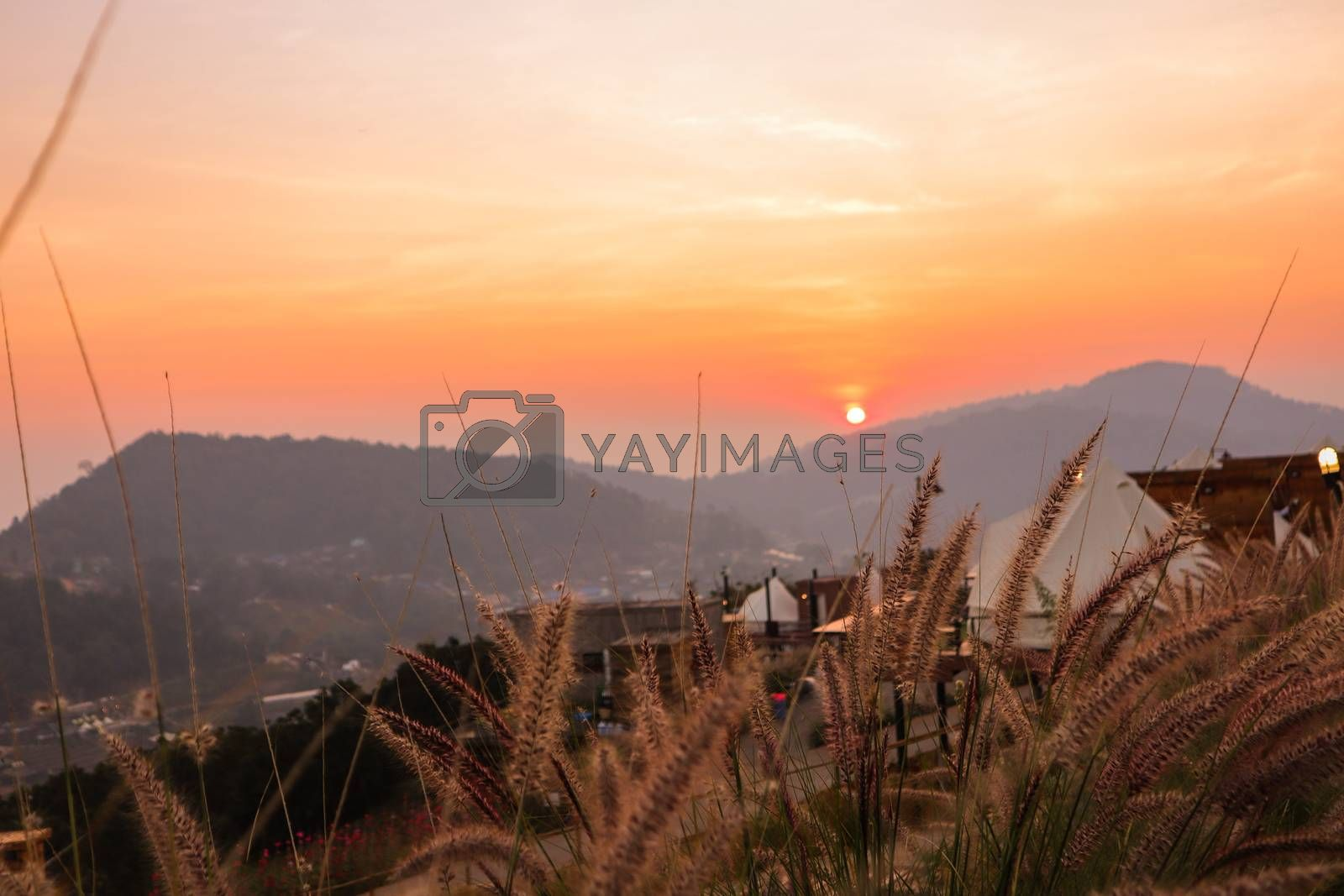 Wild spicas with mountains scenery sunset view as a background