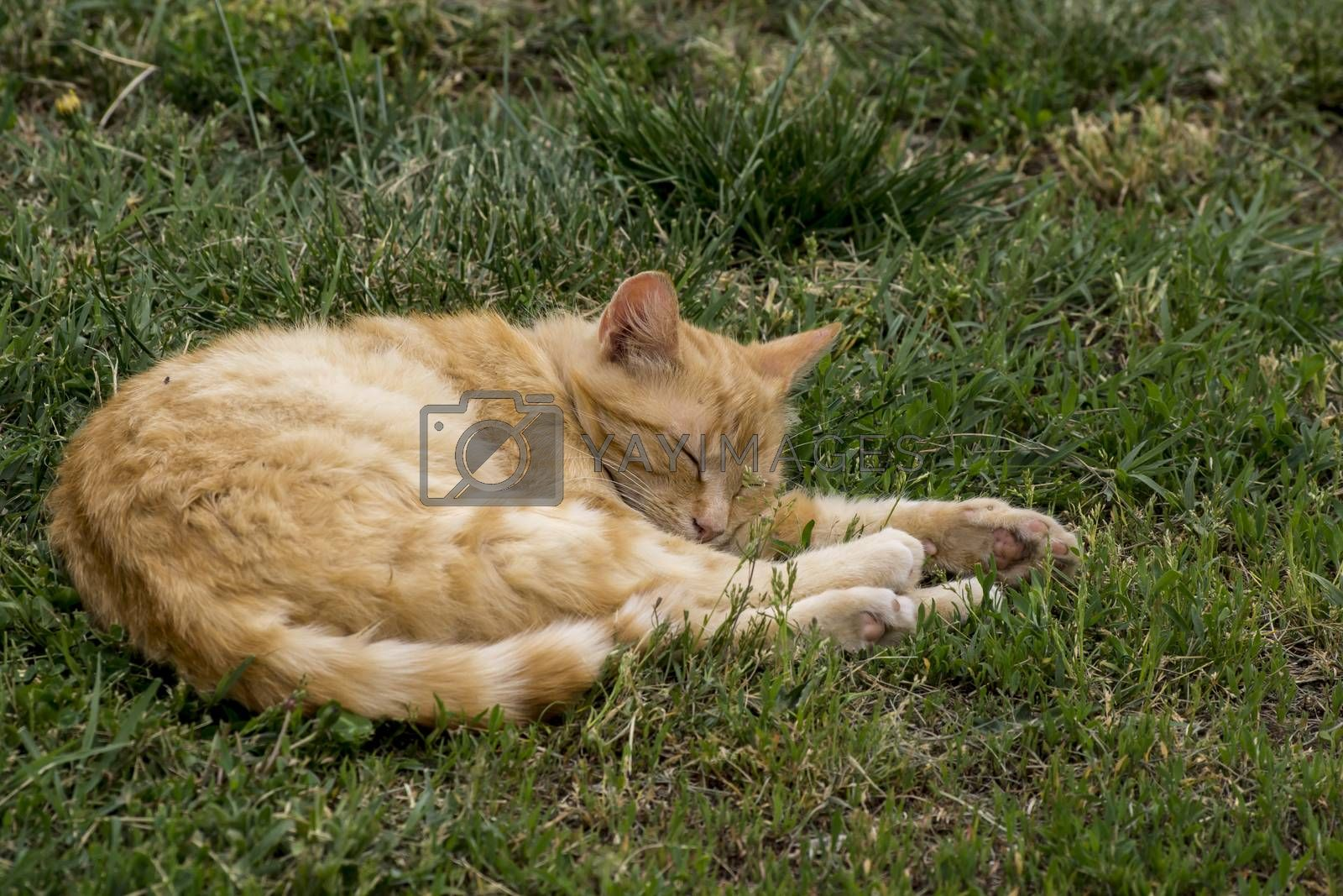 The lazy cat sleeping in the garden.