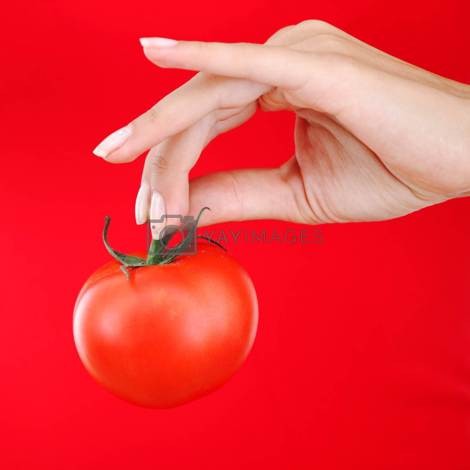 Tomato in woman hand close up on red background
