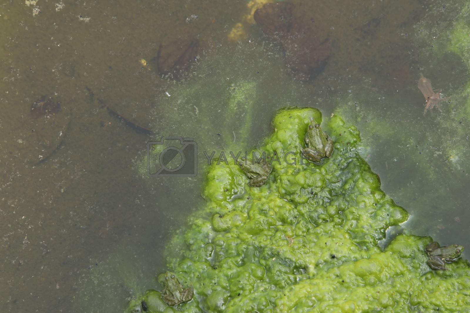 Moss in the Lava Volcano