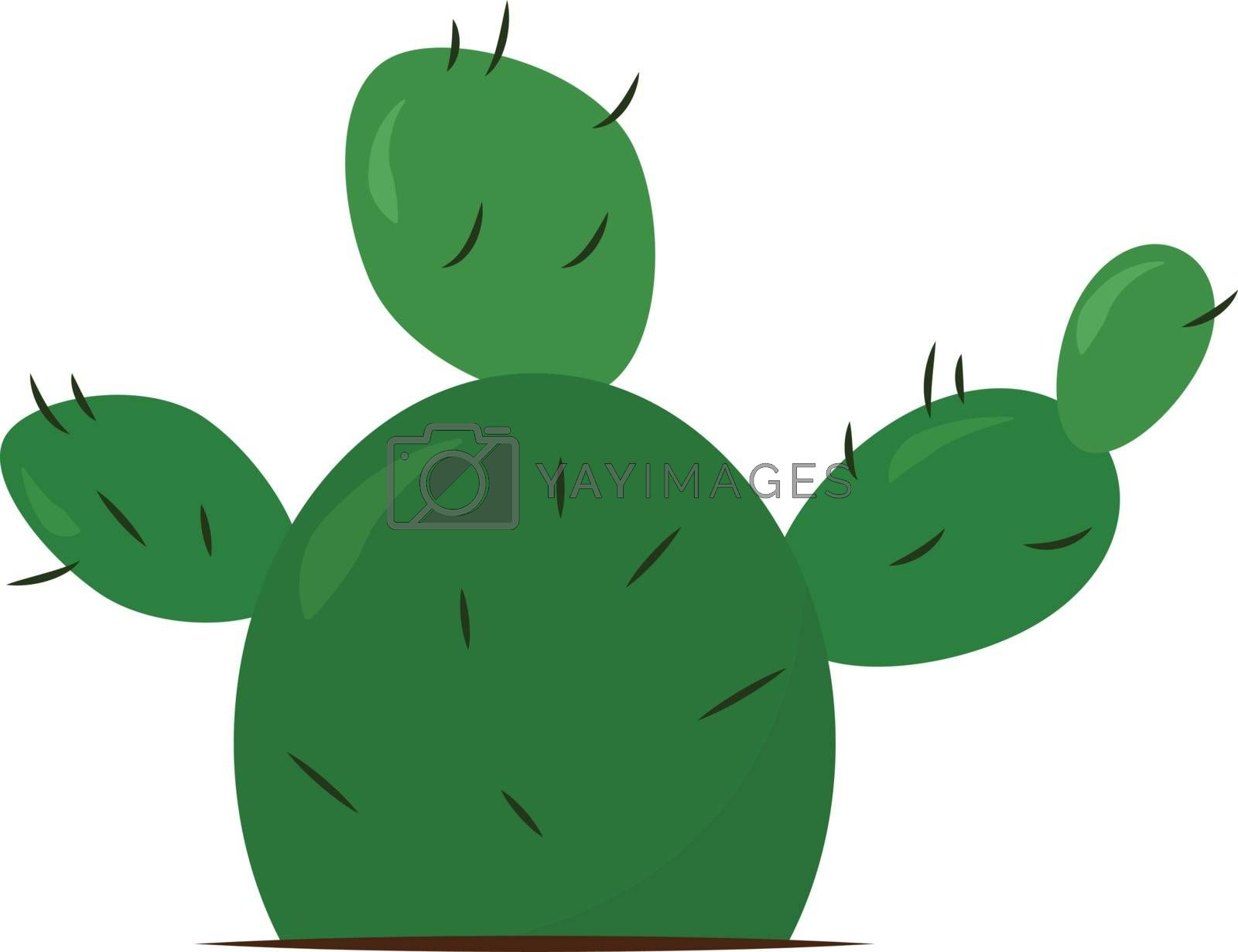 Green cactus, illustration, vector on white background.