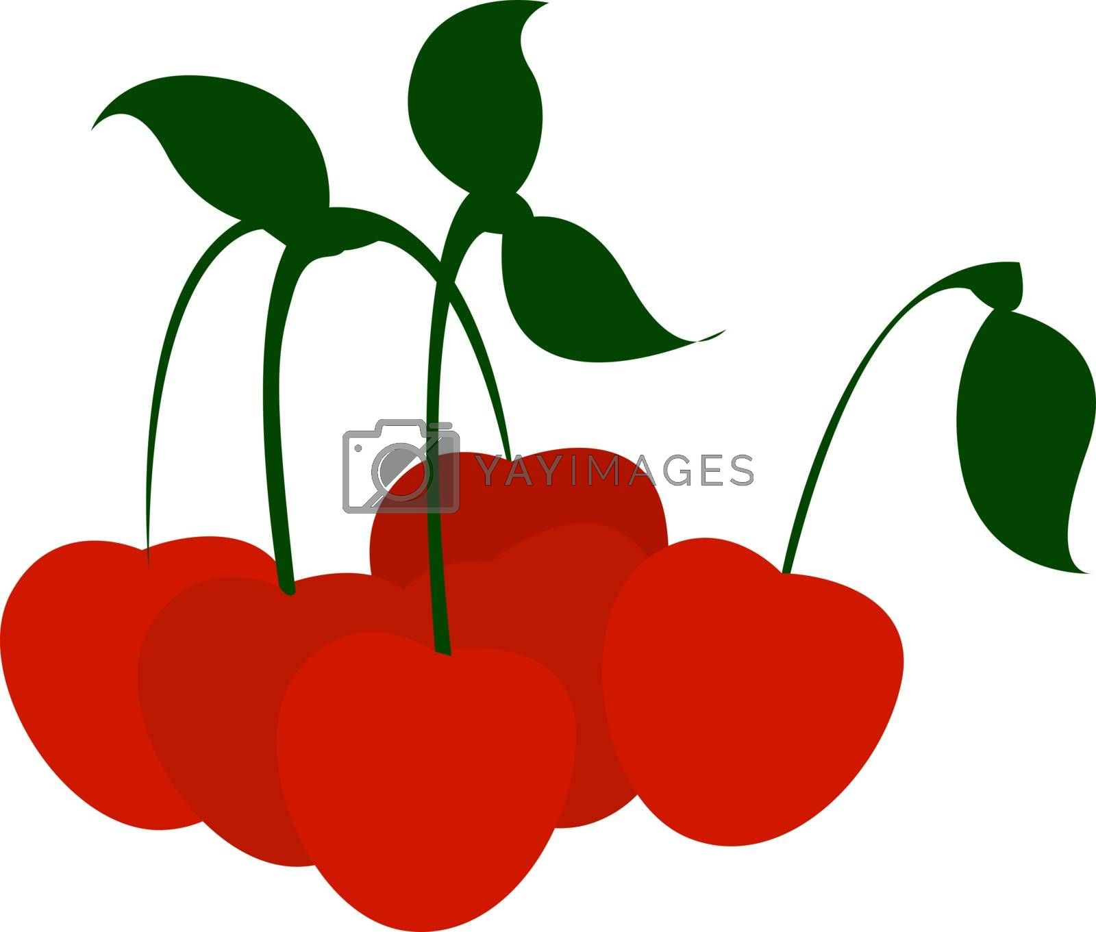 Cherries, illustration, vector on white background.