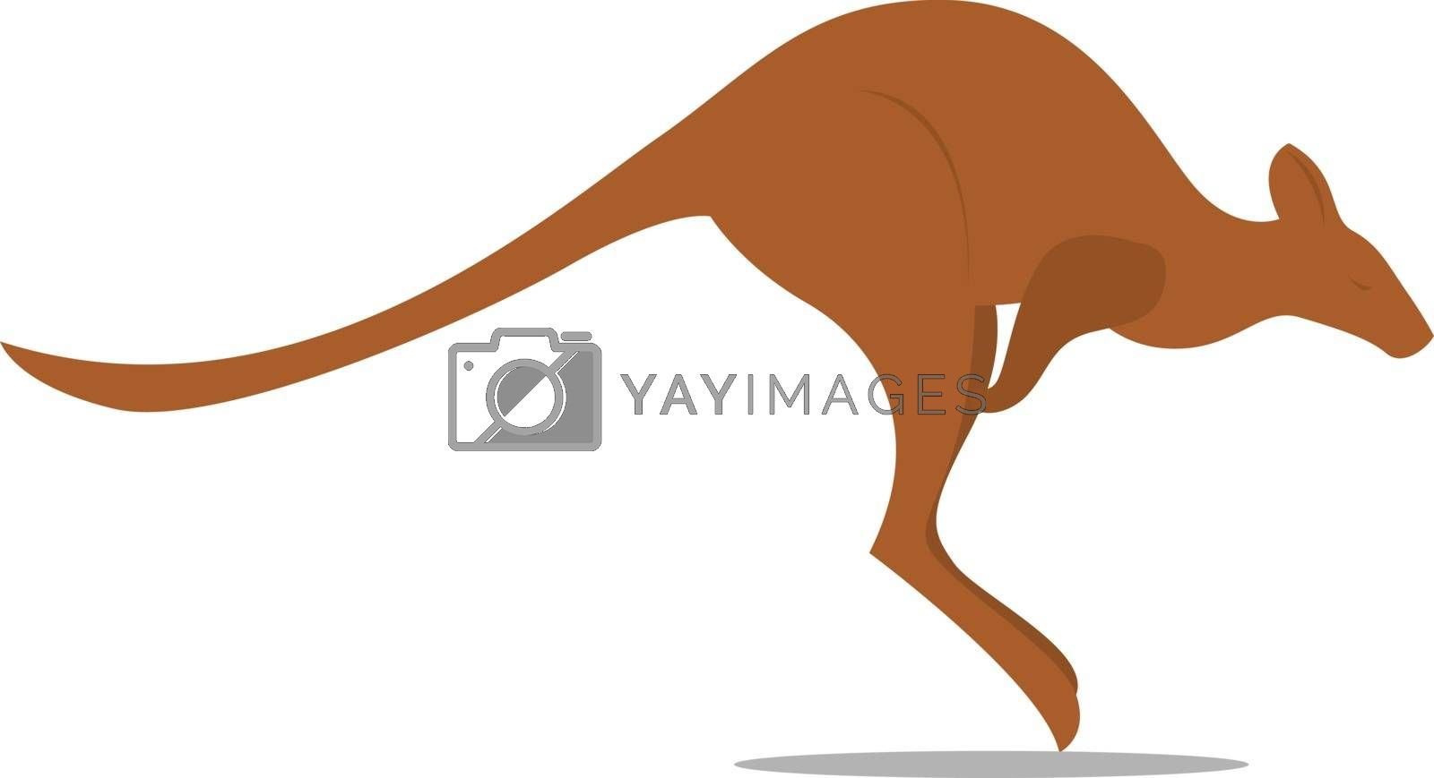 Kangaroo, illustration, vector on white background.
