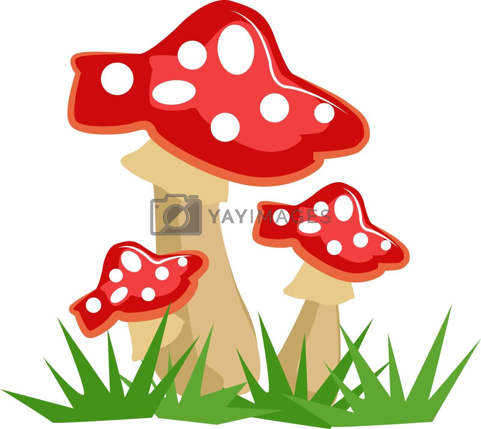 Mushrooms, illustration, vector on white background.