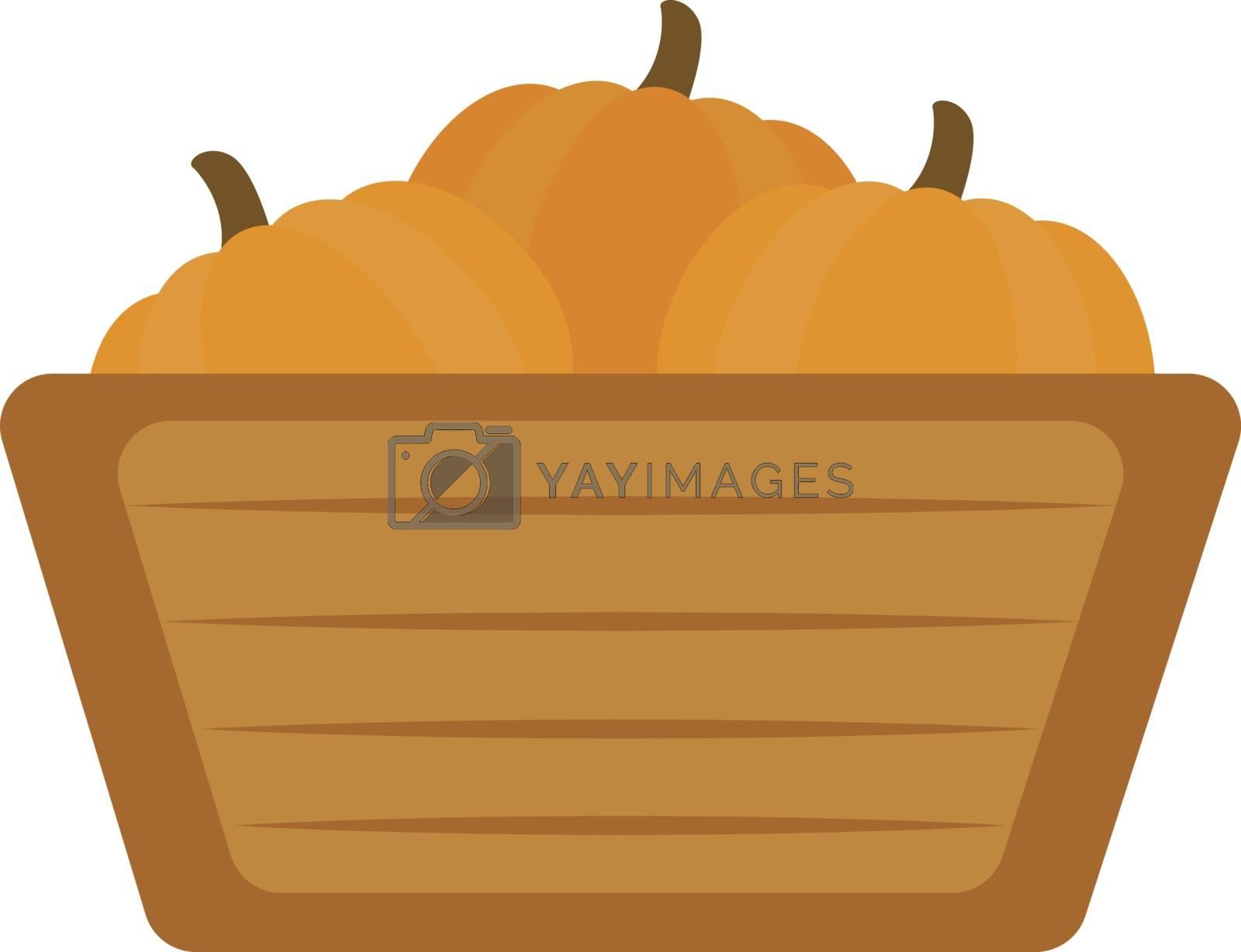 Pumpkins in basket, illustration, vector on white background.