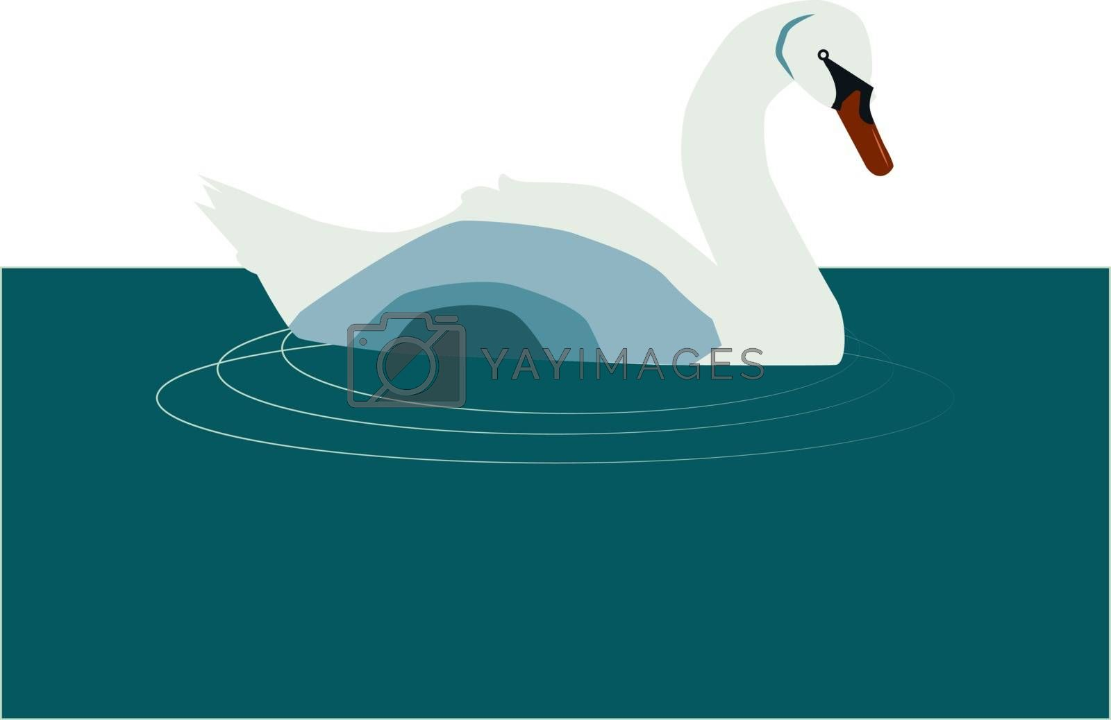 Swan on water, illustration, vector on white background. by Morphart
