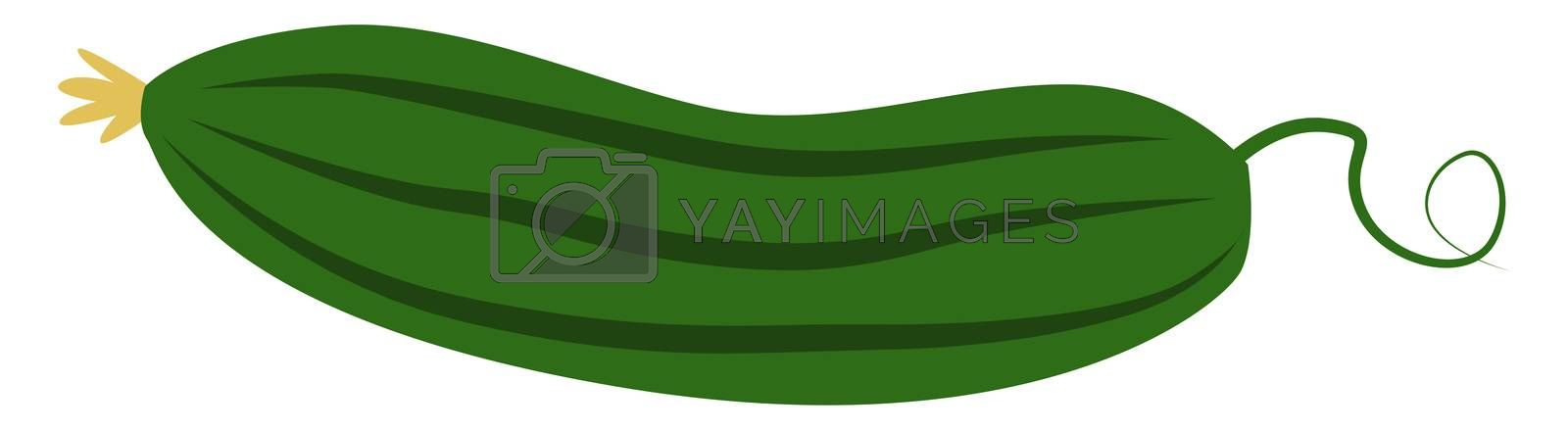 Green zucchini, illustration, vector on white background