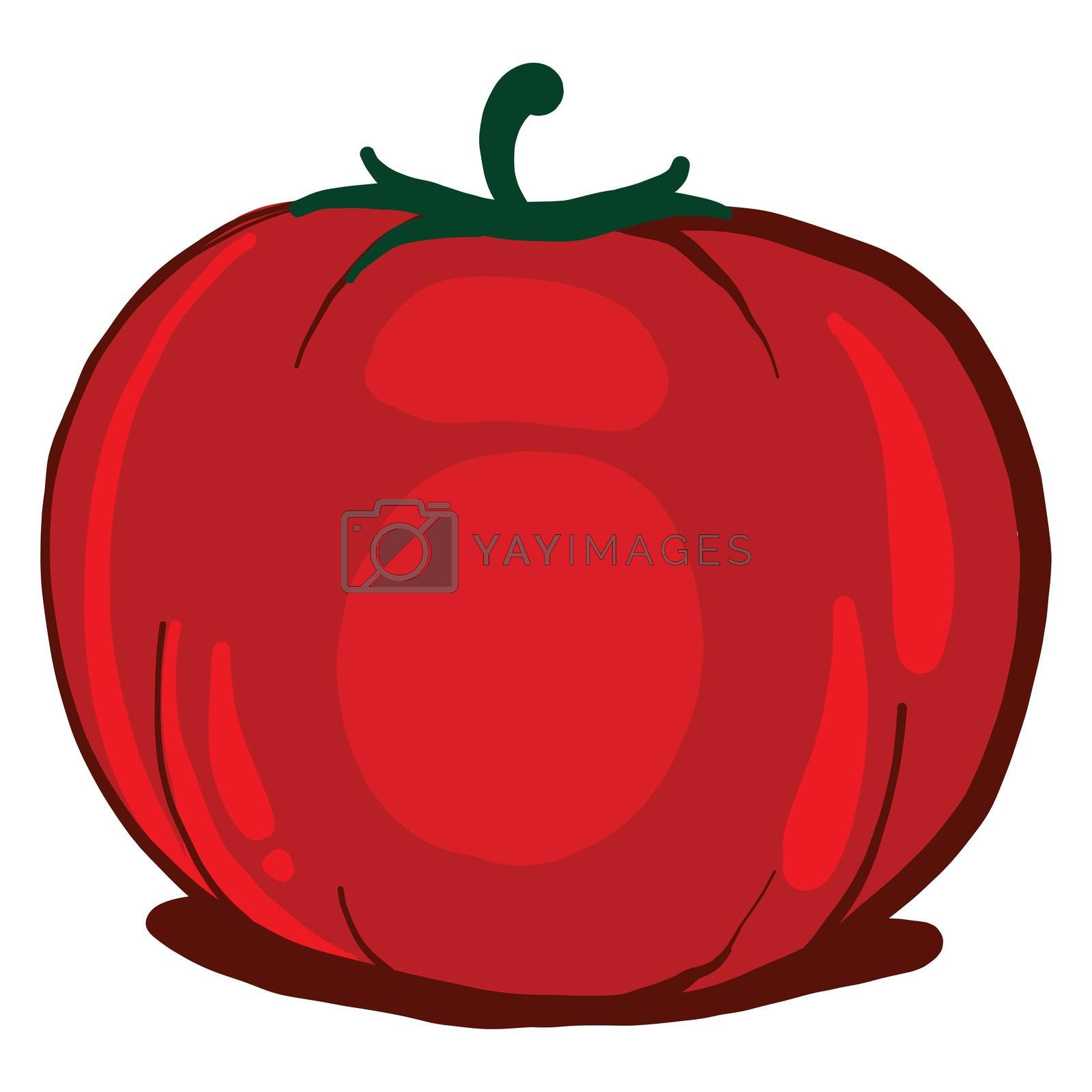 Red fresh tomato , illustration, vector on white background by Morphart