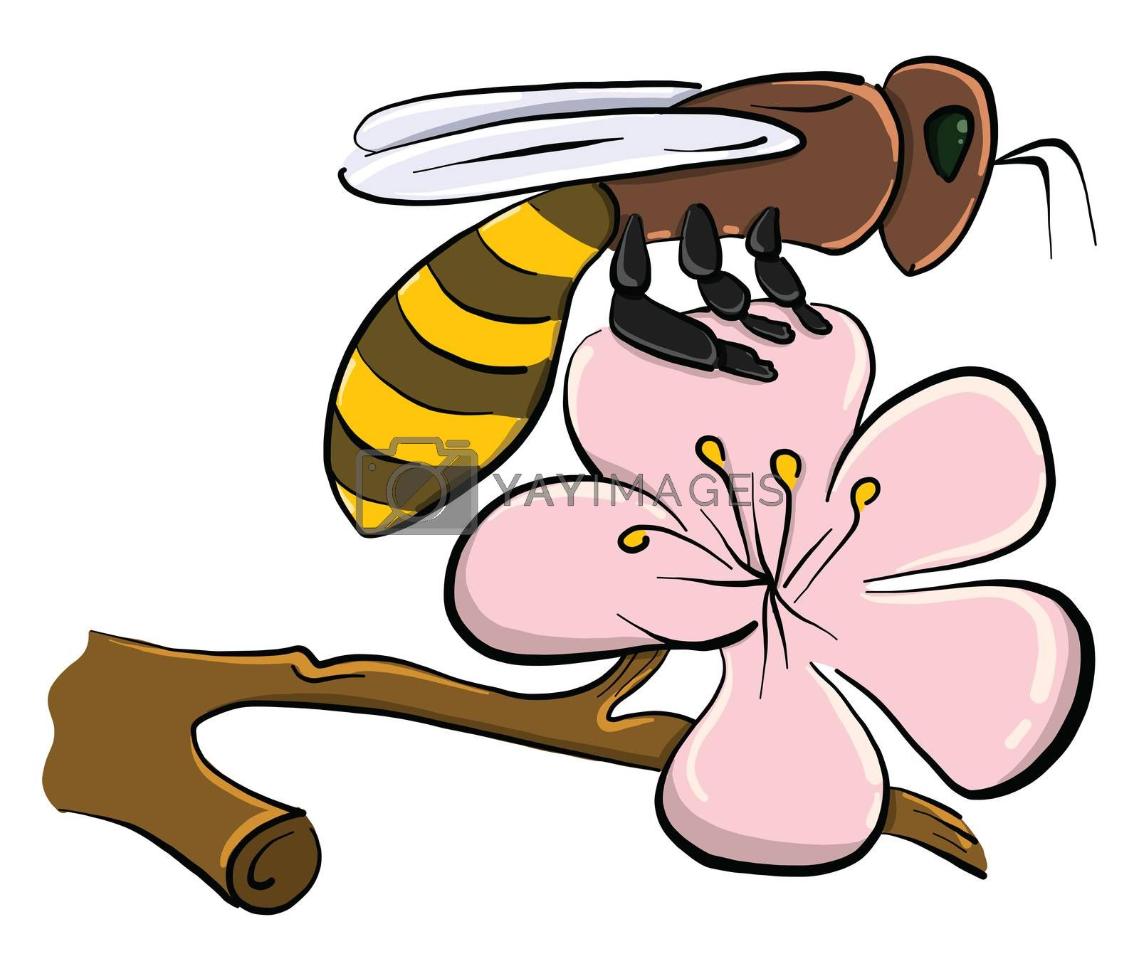 Bee on flower , illustration, vector on white background