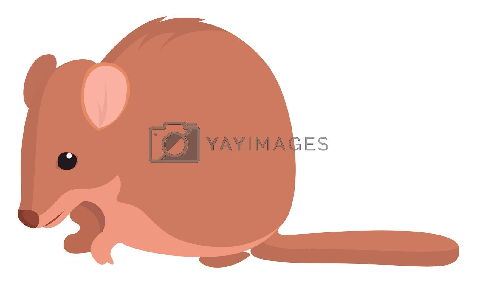 Bettong animal , illustration, vector on white background