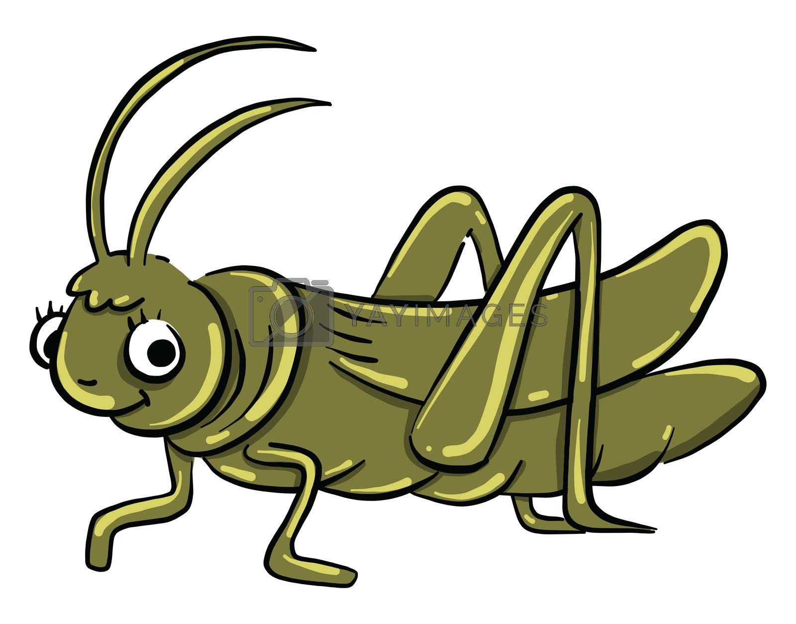 Green grasshopper , illustration, vector on white background