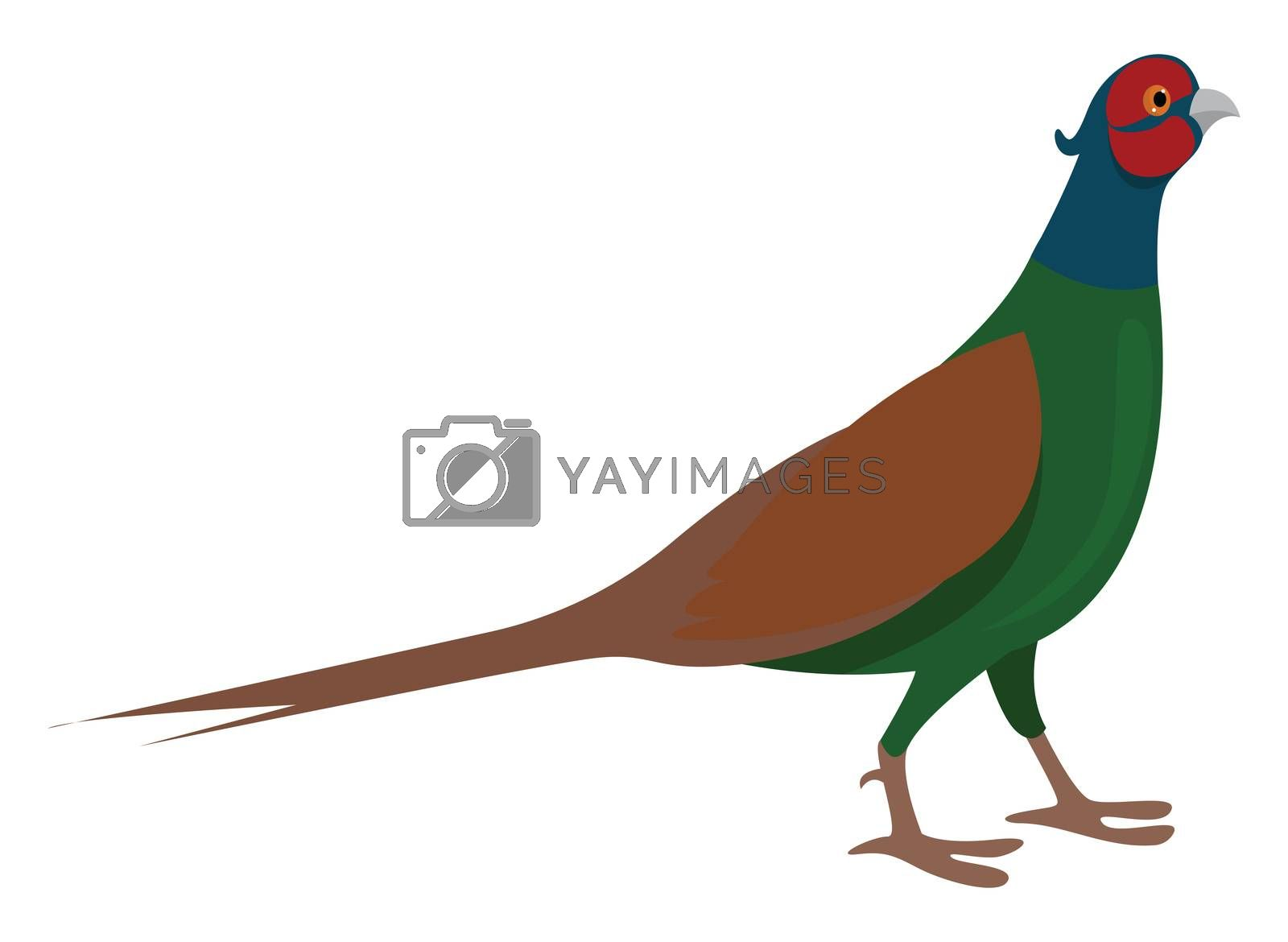 Green pheasant , illustration, vector on white background