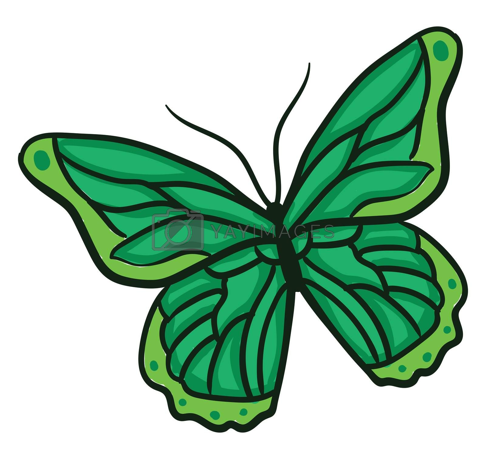 Green butterfly , illustration, vector on white background