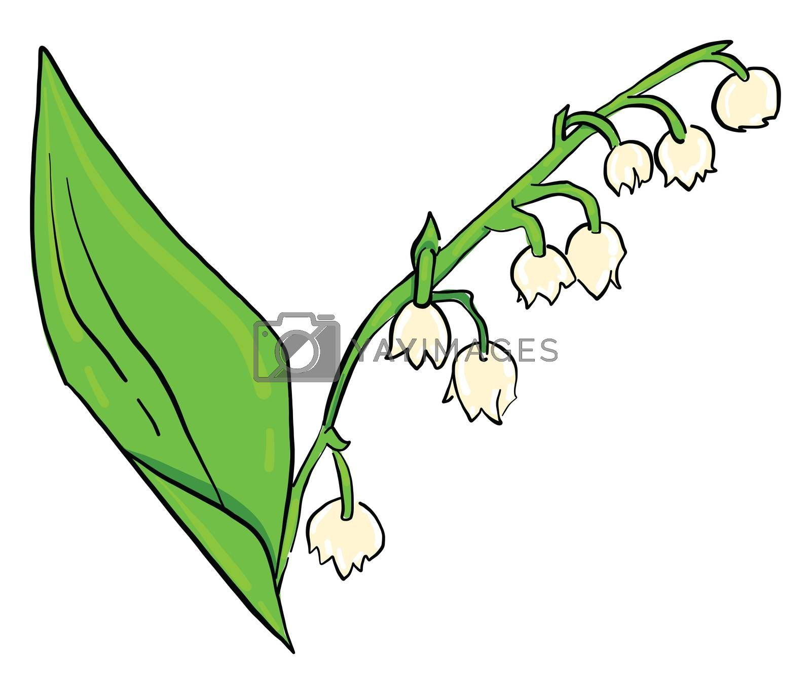 Lily of the valley , illustration, vector on white background