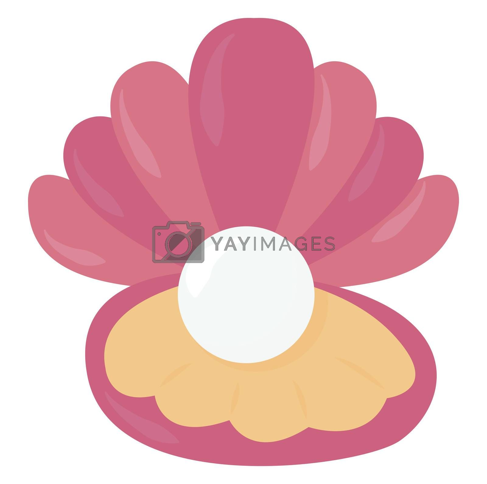 Oyster with pearl , illustration, vector on white background