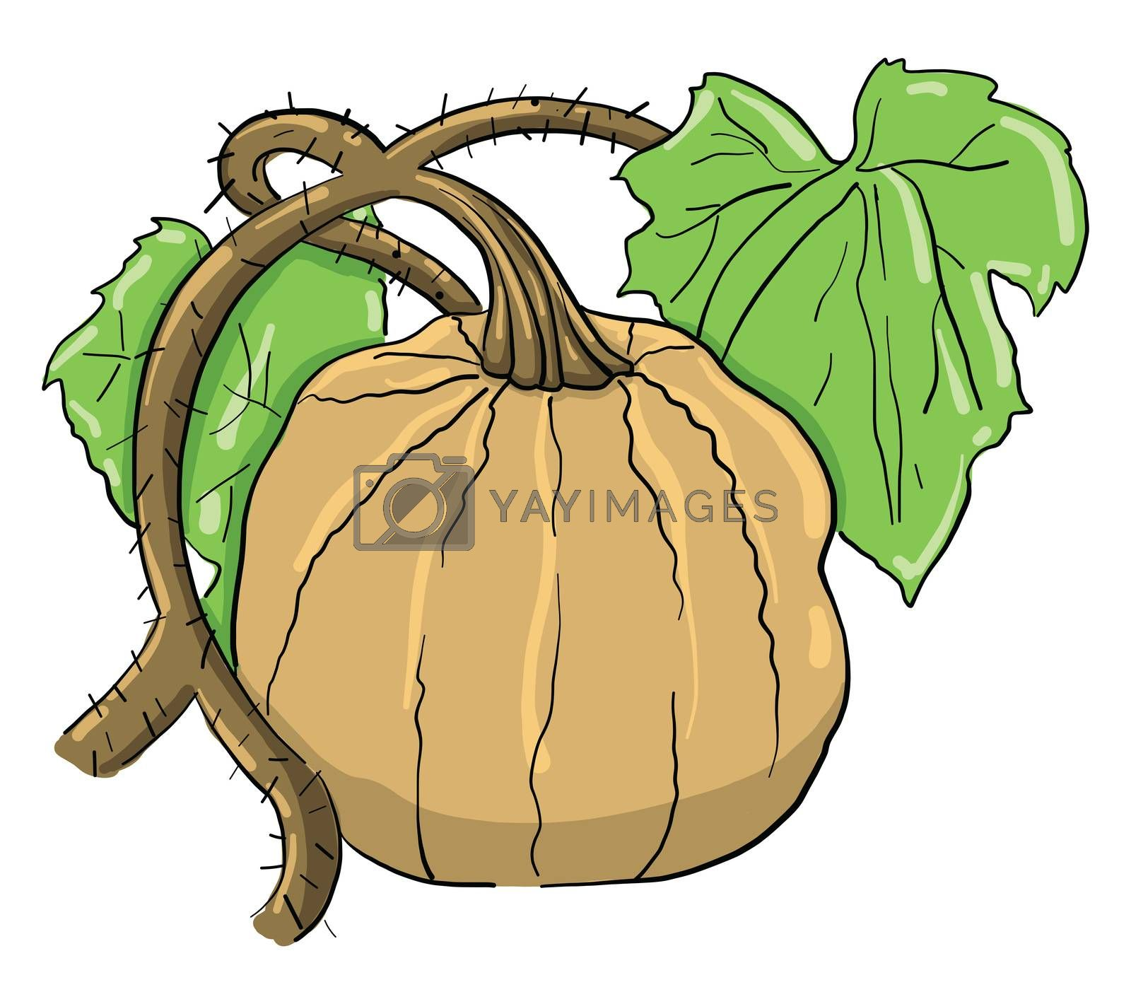 Big pumpkin , illustration, vector on white background