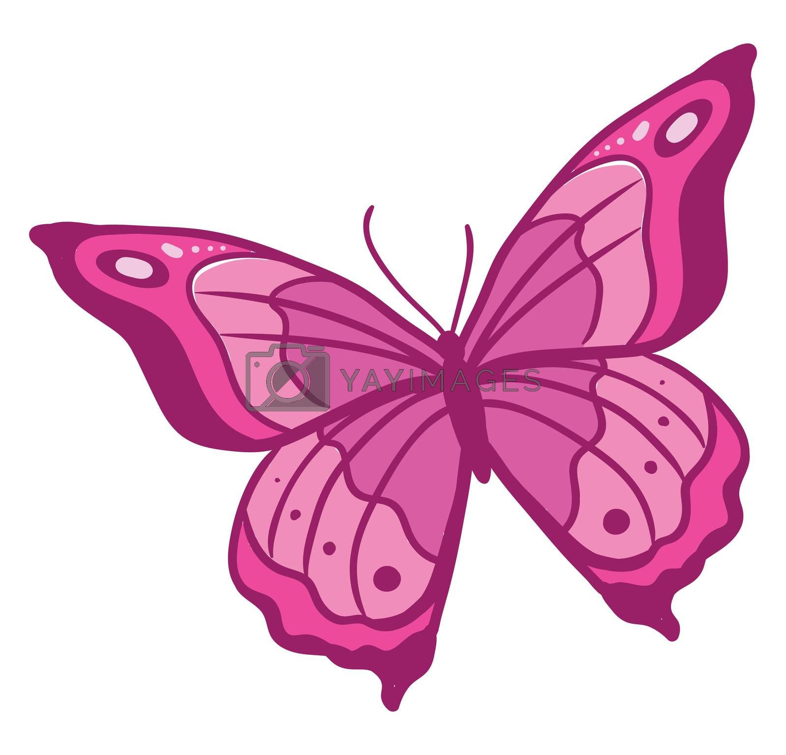 Pink butterfly , illustration, vector on white background