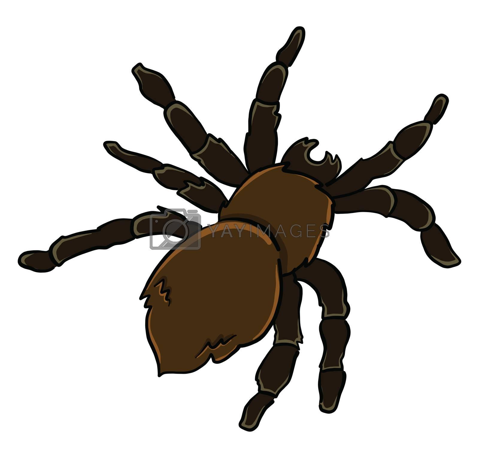 Black spider , illustration, vector on white background