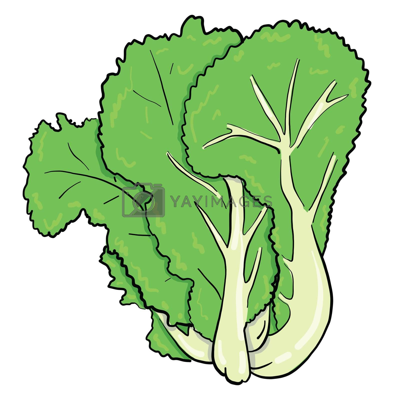 Green salad , illustration, vector on white background
