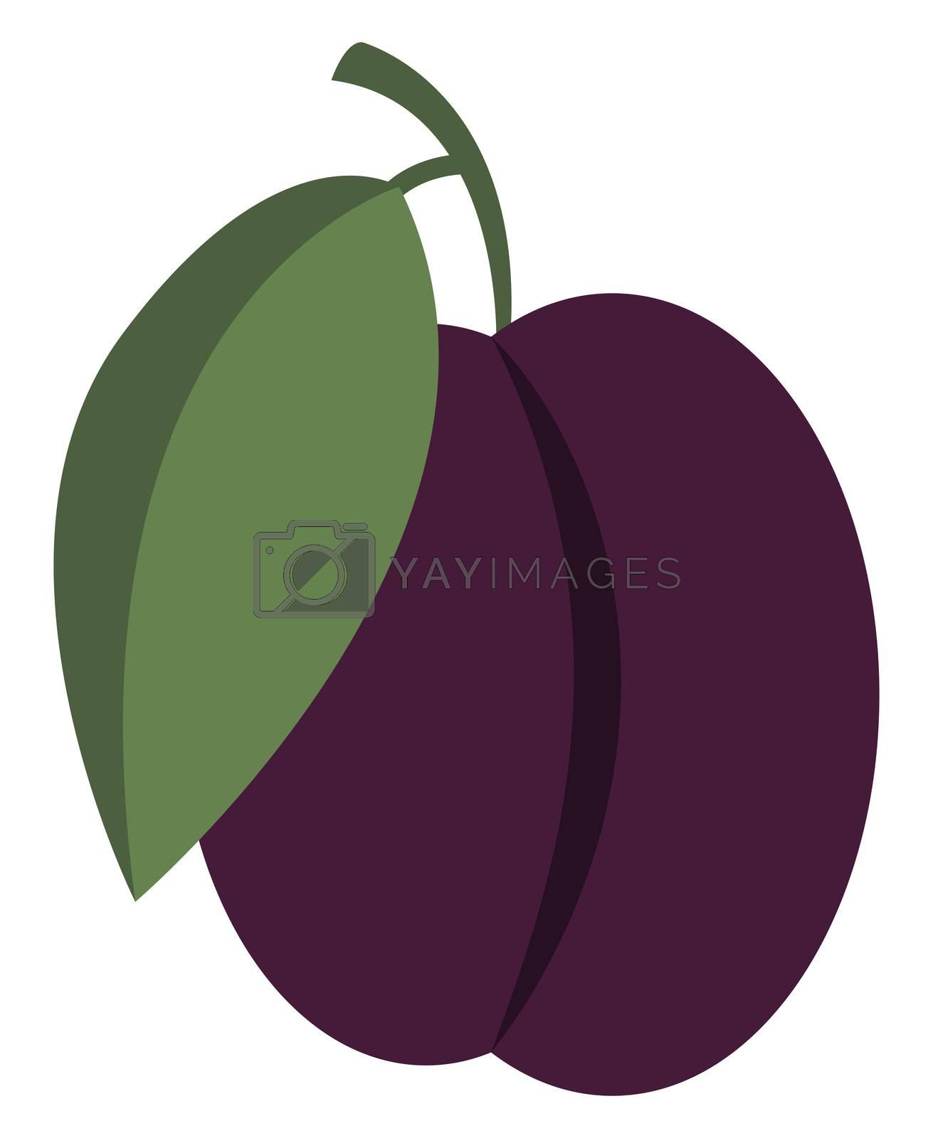 Purple plum, illustration, vector on white background