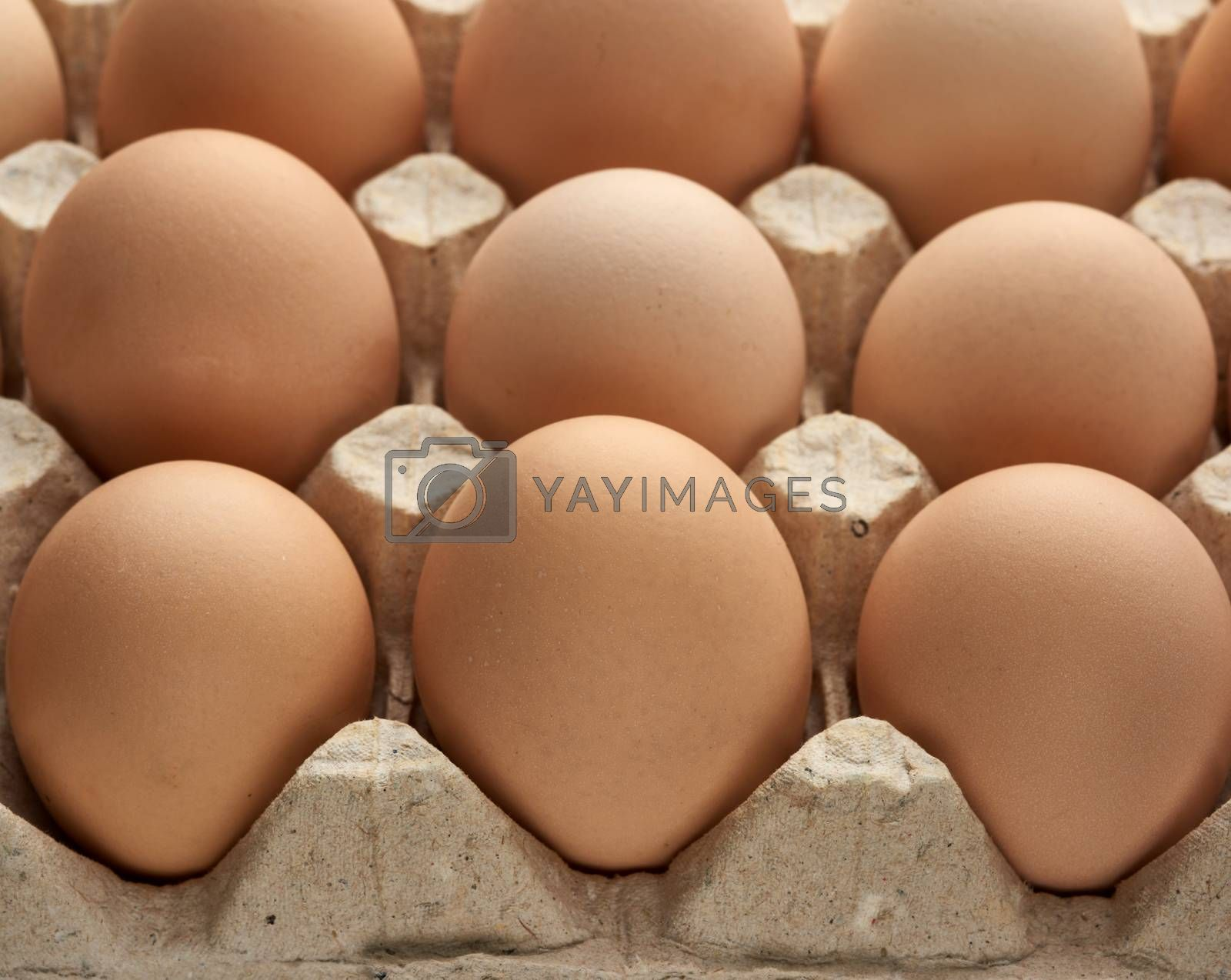 whole round raw brown homemade chicken eggs in a paper tray, sel by ndanko