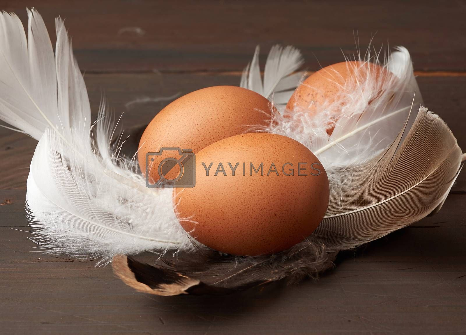 brown whole chicken eggs in the middle of white feathers on a wo by ndanko