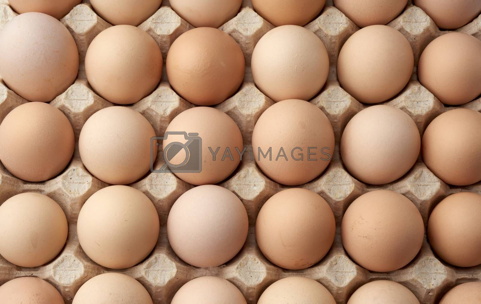whole round raw brown homemade chicken eggs in a paper tray by ndanko
