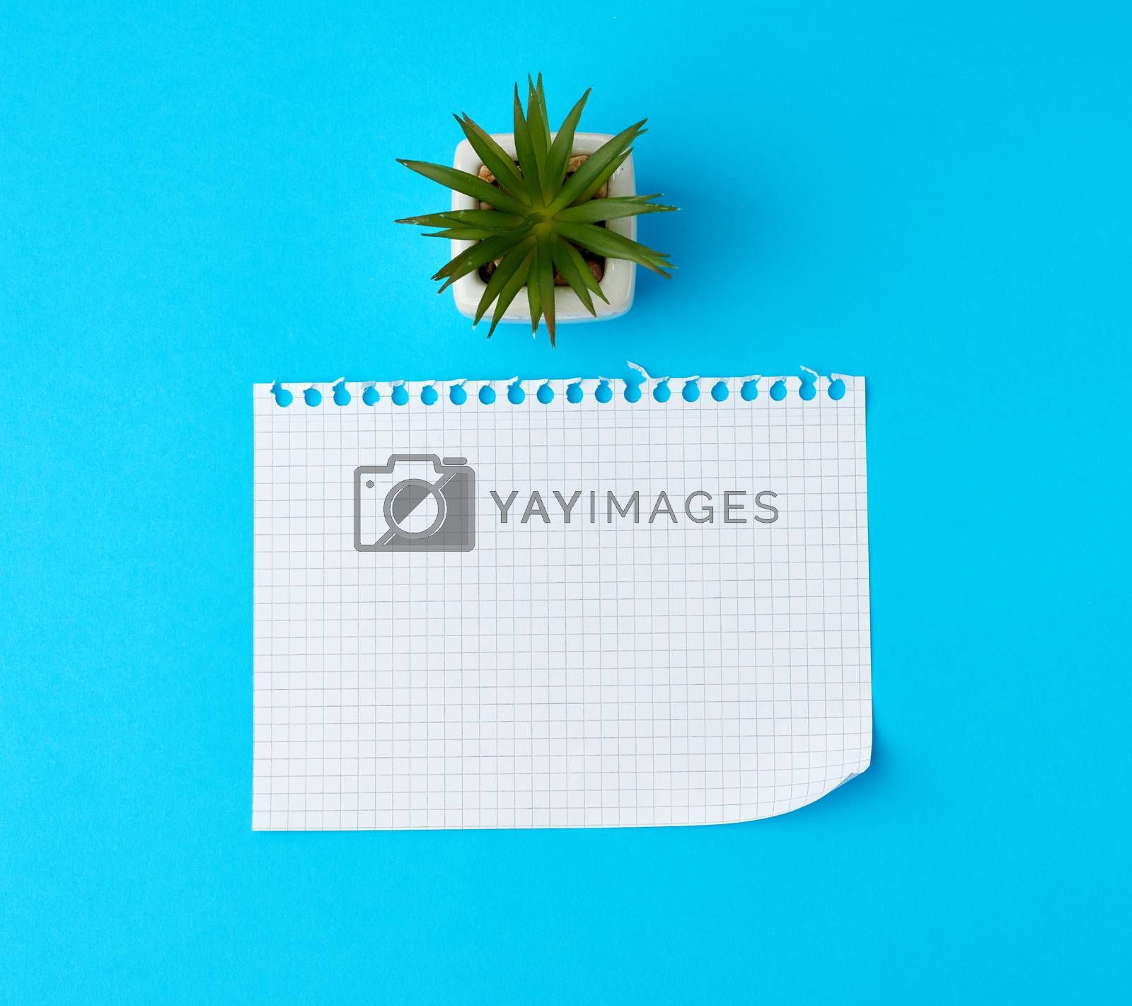 empty rectangular white sheet torn out of notepad on a blue background, top view