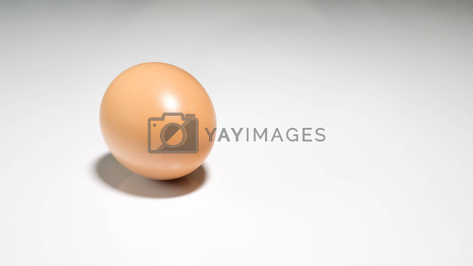 whole chicken egg on a white background