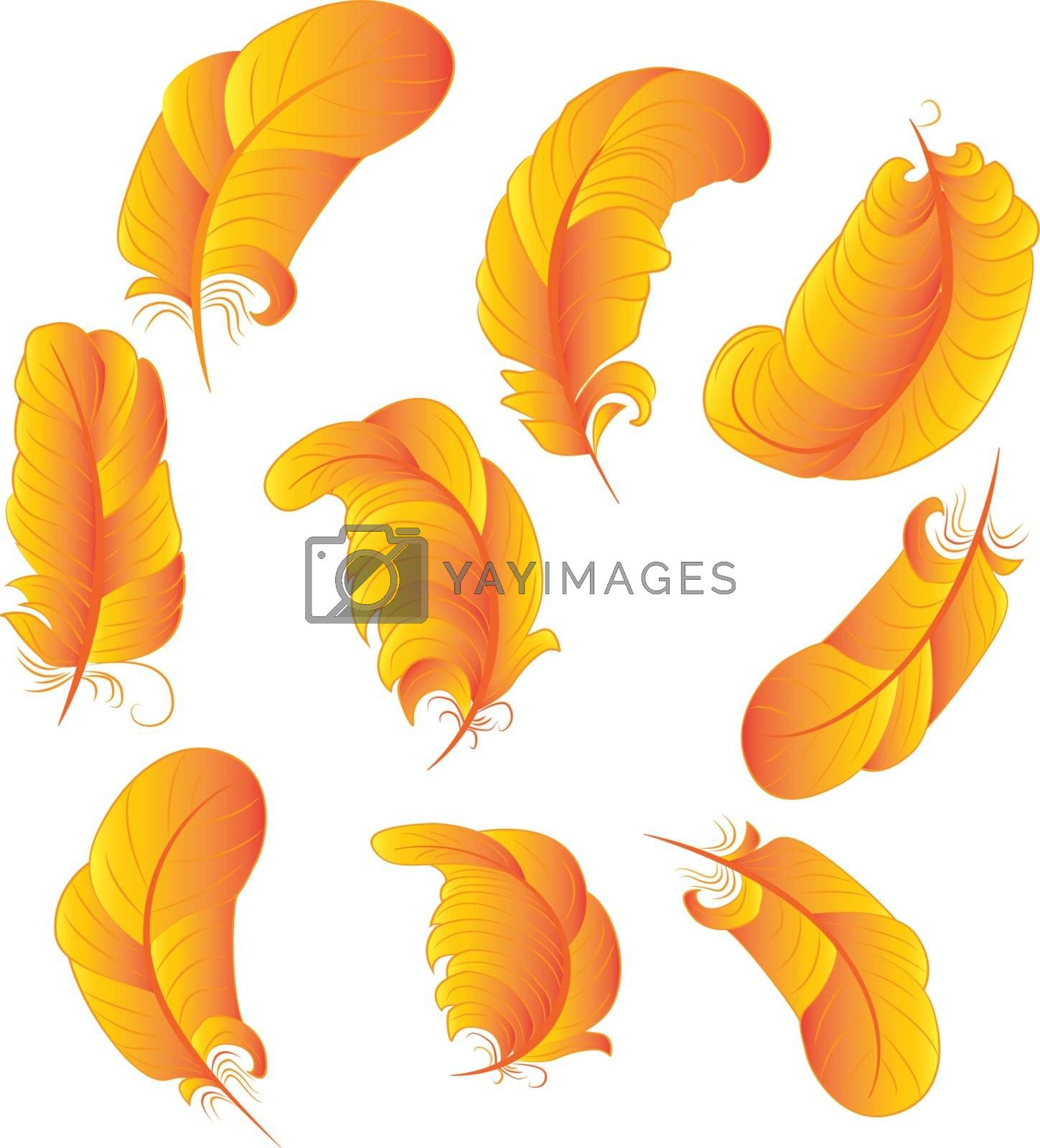 Set of feathers in gold gradient color vector graphic illustration on a white background