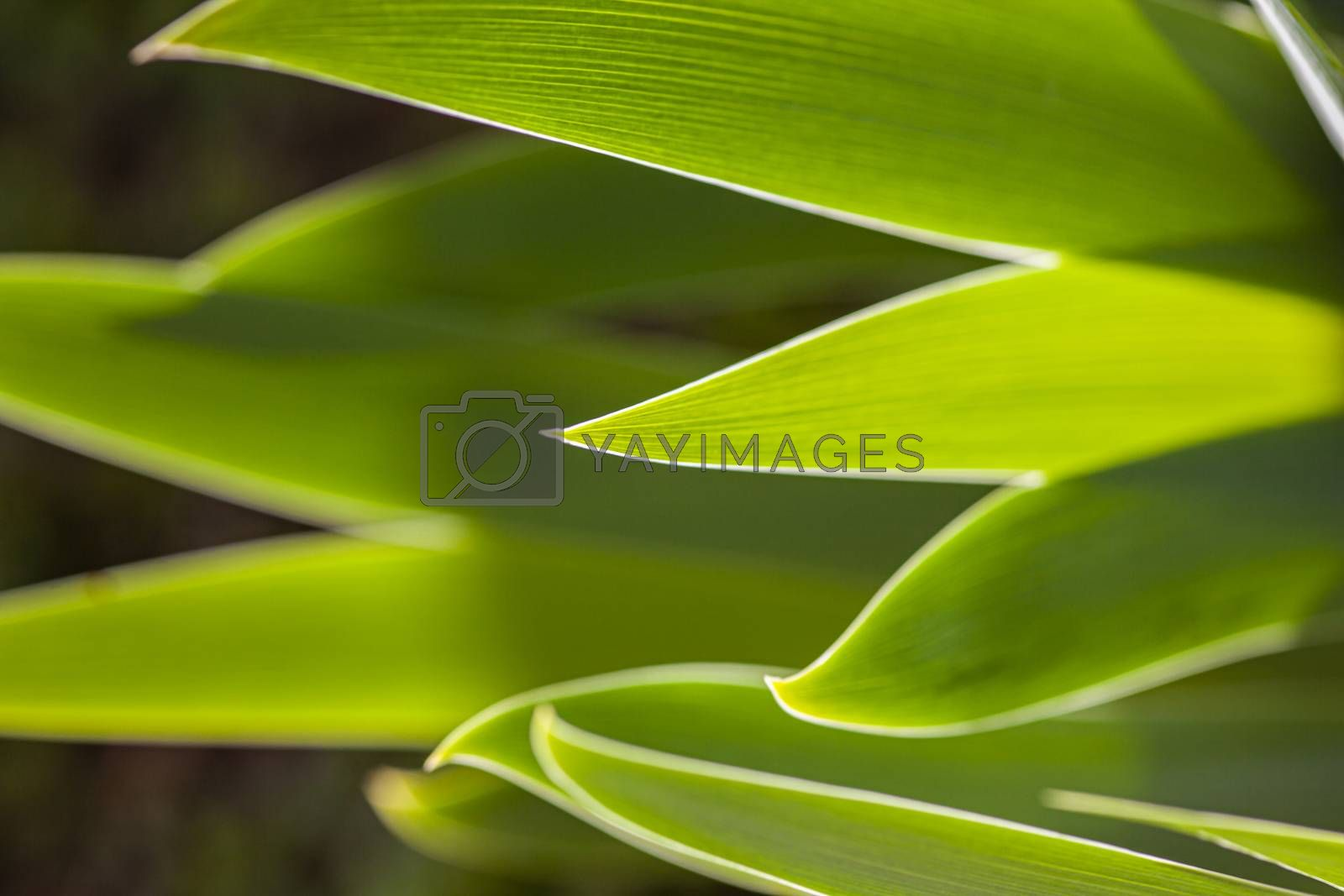 Nature Green Background with leaves at spring taken with macro lens