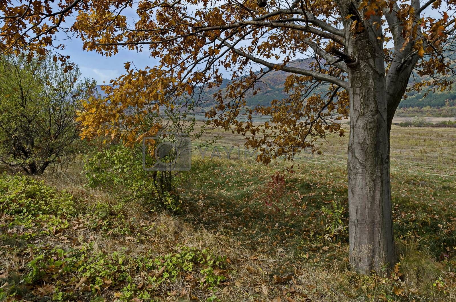 Colorful autumn   forest with coniferous and deciduous trees, road and glade in the Balkan mountain, near Kazanlak, Bulgaria