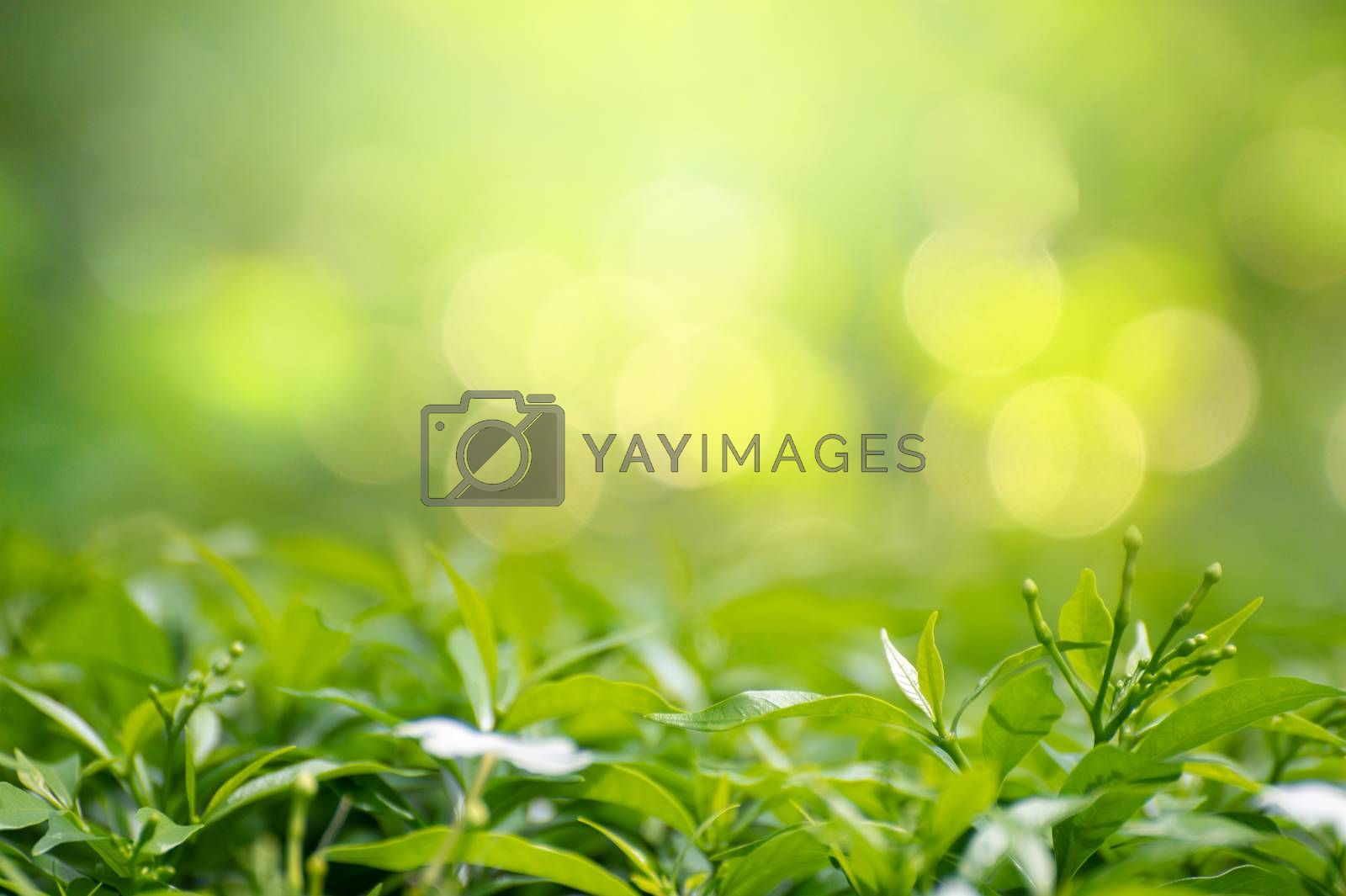 Leaf background bokeh blur green background