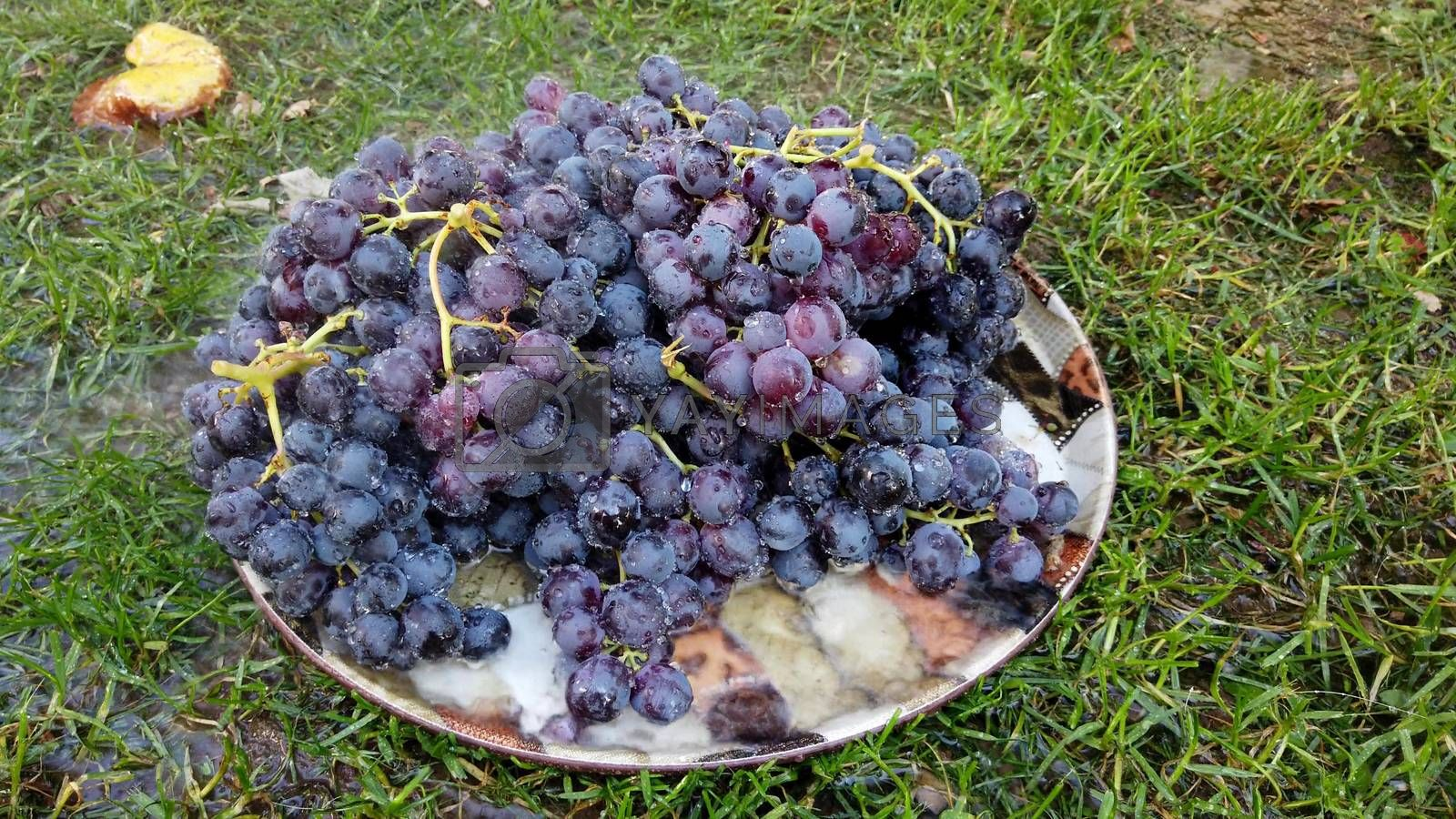 fresh harvested red ripe grape , waterdrops image