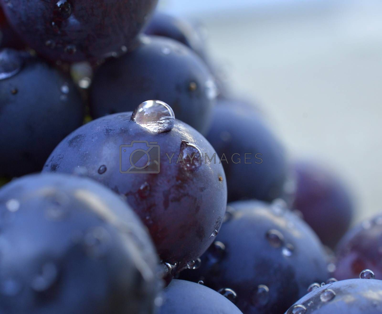 water drops on a red grape image