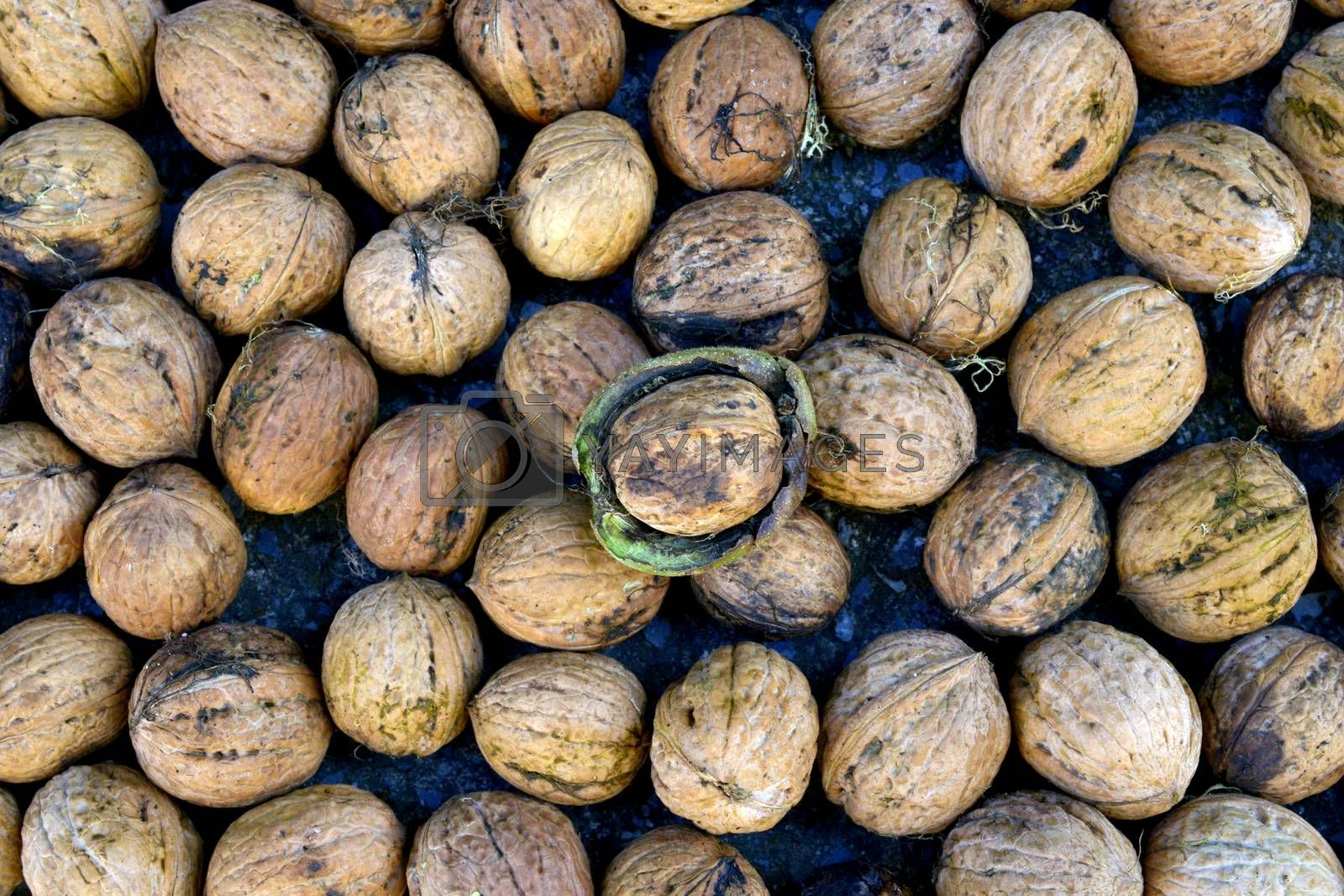 image of organic nuts, autumn concept image