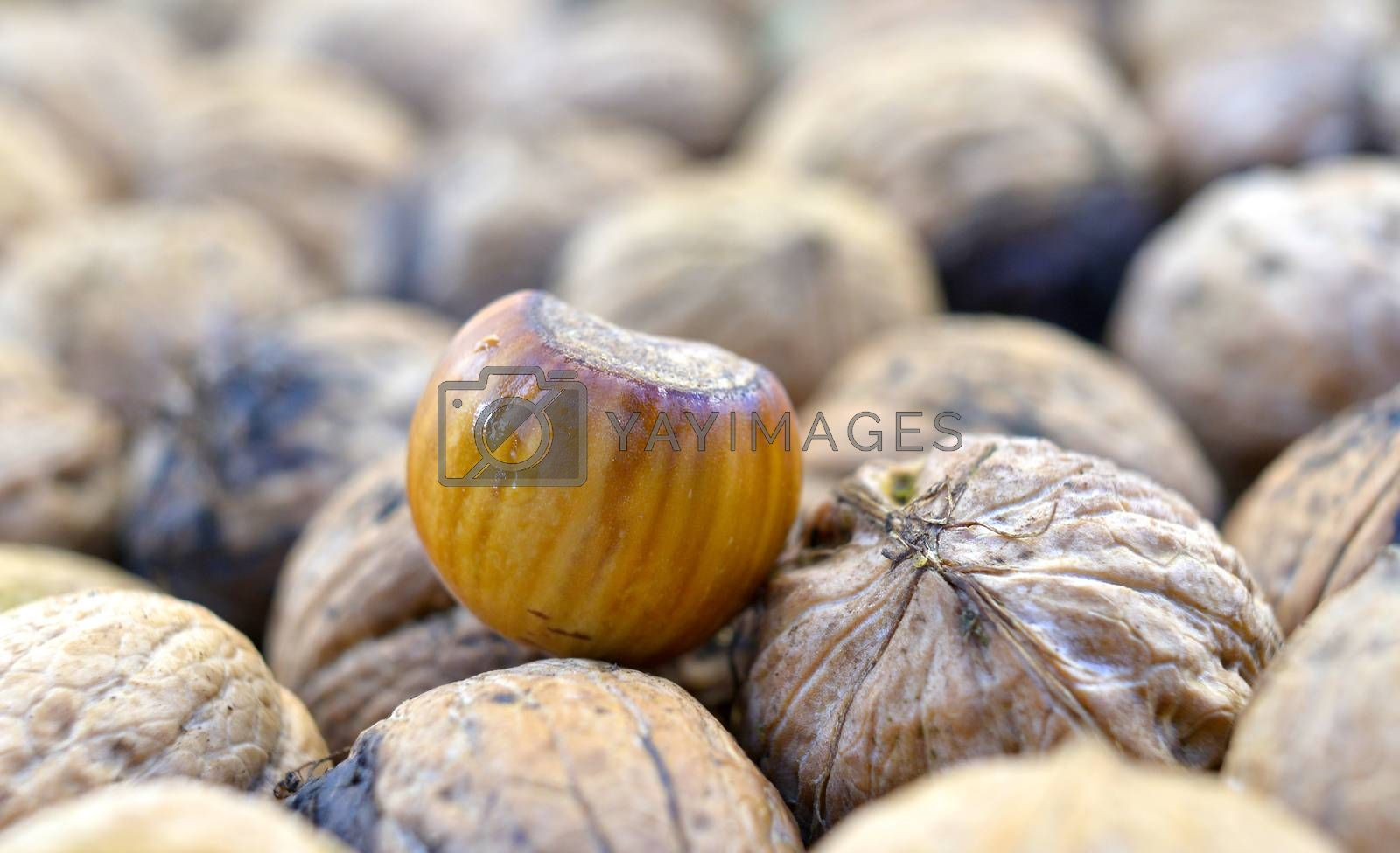 image of raw organic nuts,image of a