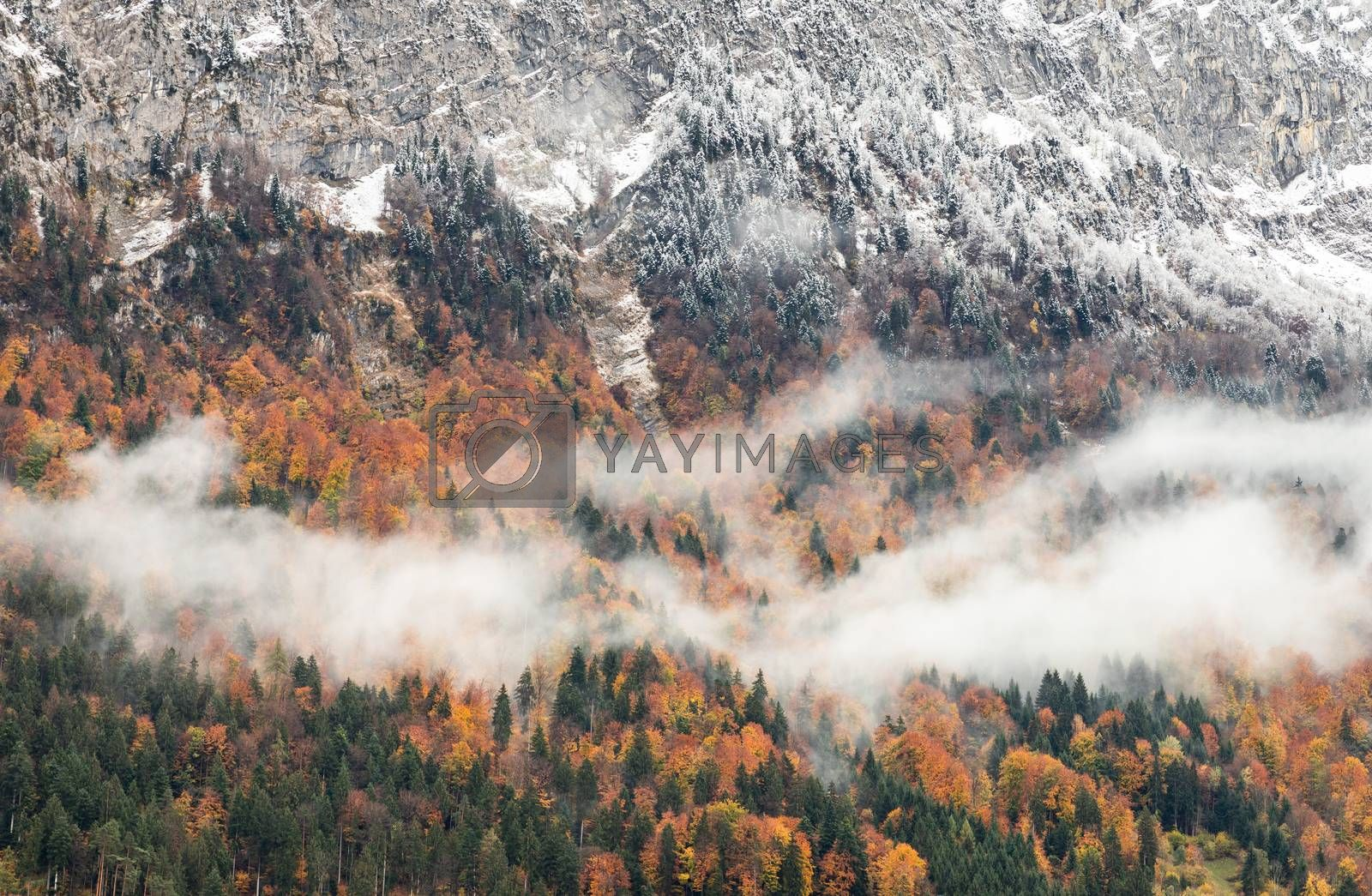 Snow-capped mountain with colorful of tree of Interlaken, Switzerland. Early winter of November 2019, snow start to cover mountain area with cold temperature.