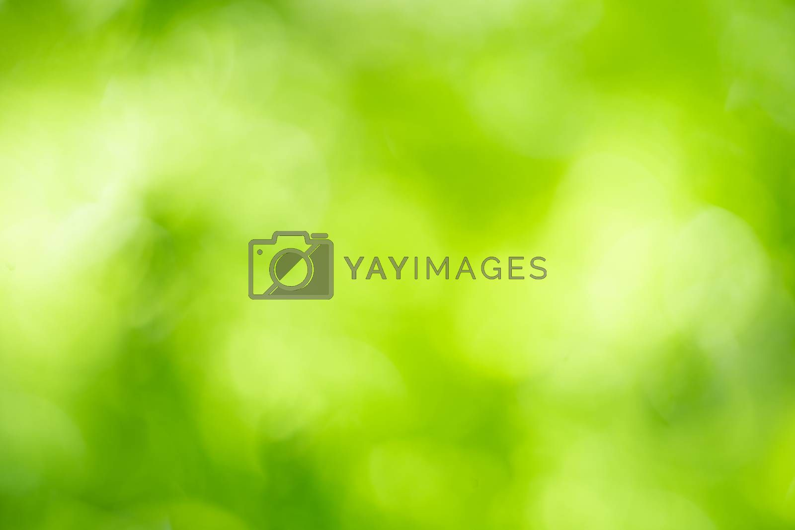 Beautiful abstract lights of green nature using as background or wallpaper concept.
