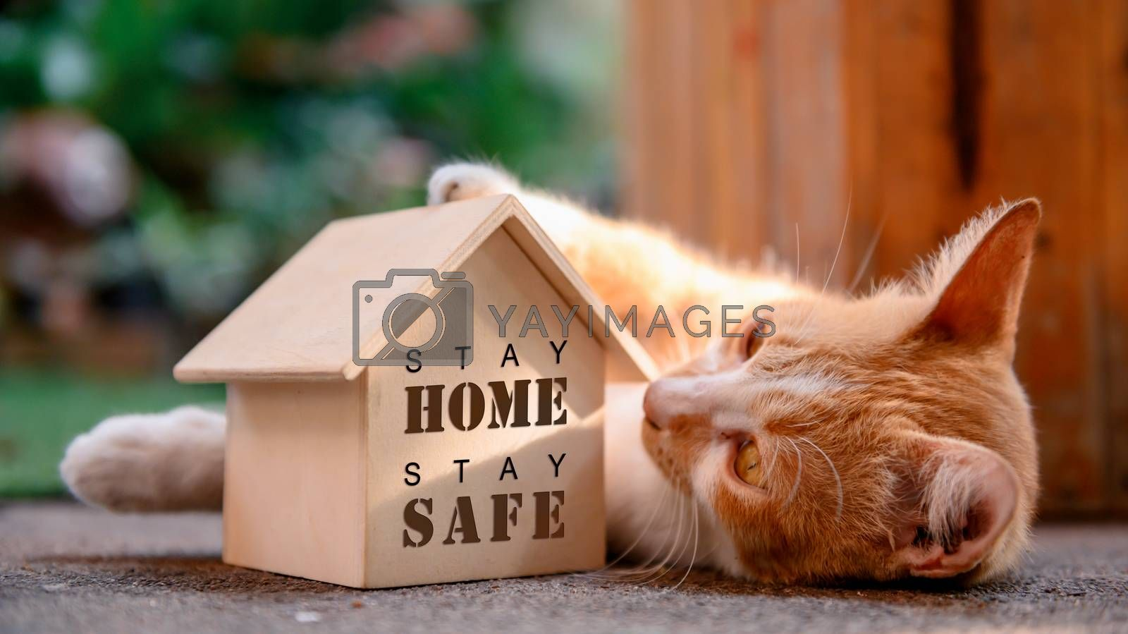 Cat with wooden house. Self-quarantine and stay home during Covid-19. Lovely pet in the garden with toy. Stay home stay safe and social distancing concept. by graphixchon