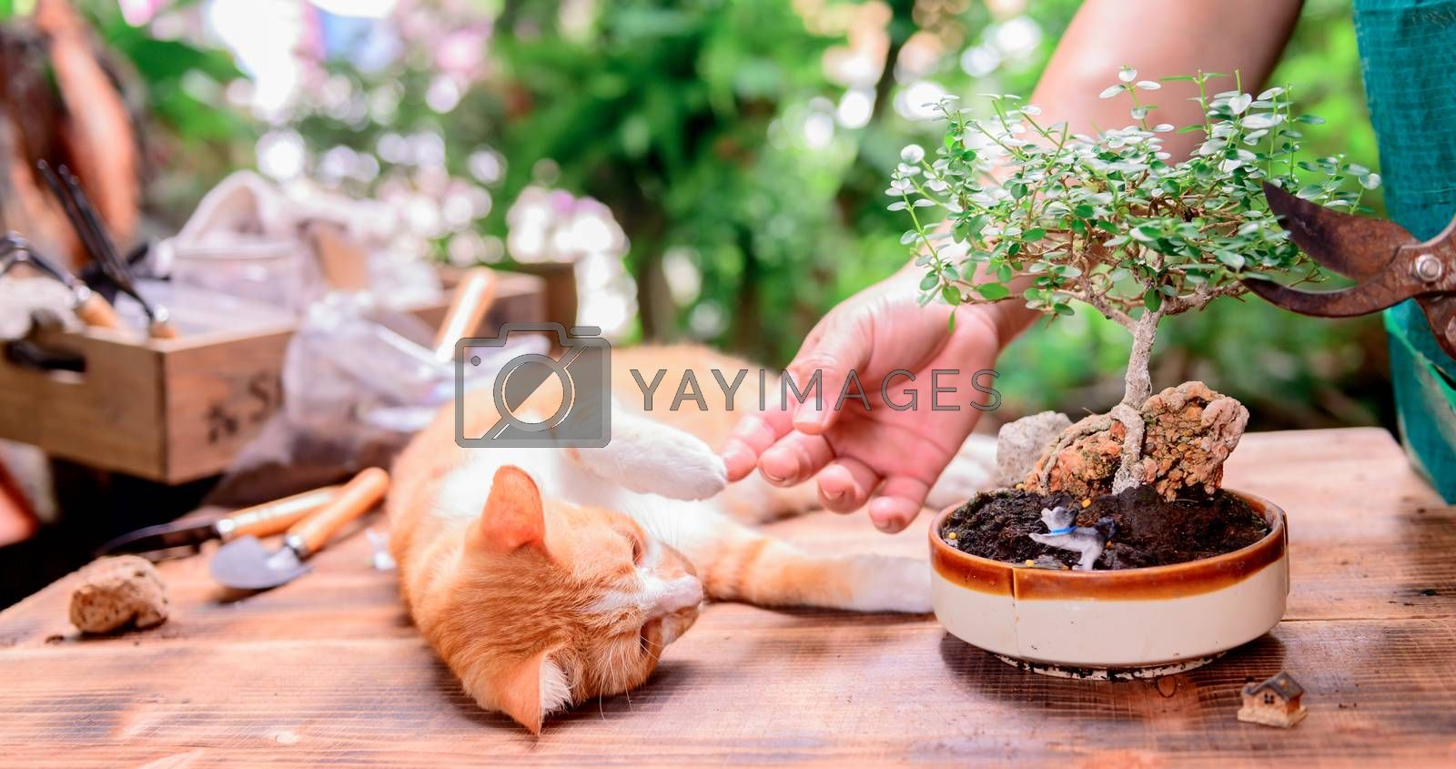 Home gardening with cat when Lock down and Self-quarantine. Recreation activity at botanic garden during the Corona virus crisis. Stay home for relax and Social distancing. by graphixchon