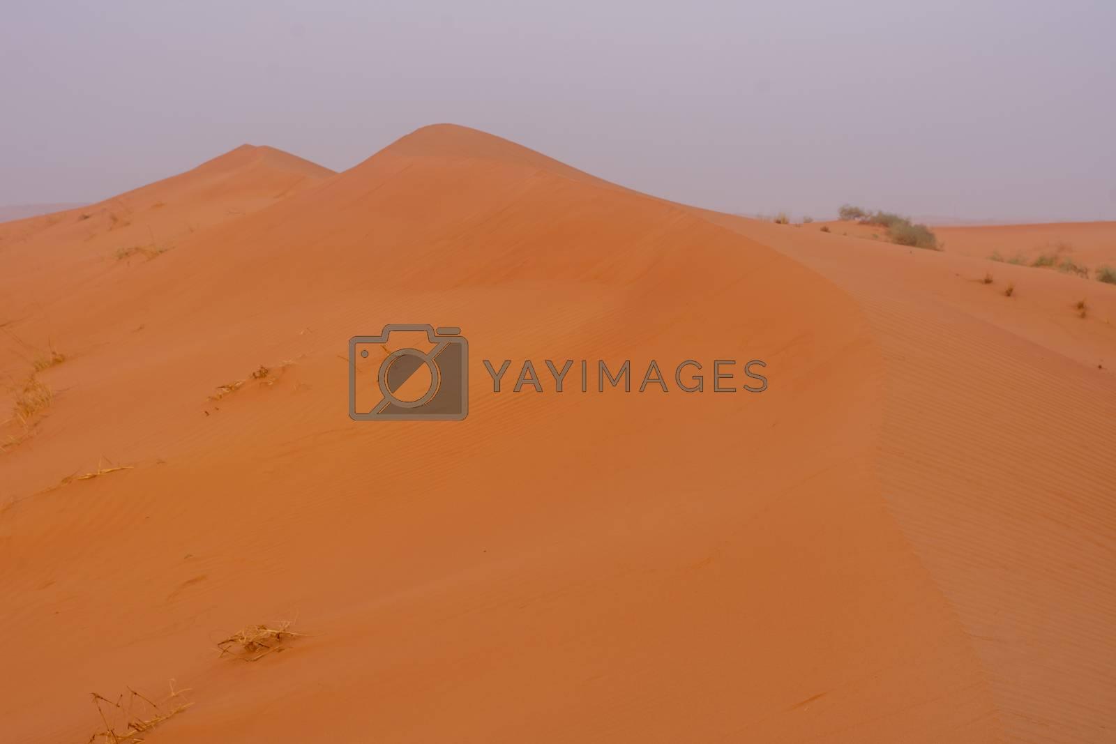 Desert at sunrise brings out bold burnt orange colored sand making a great desert landscape.