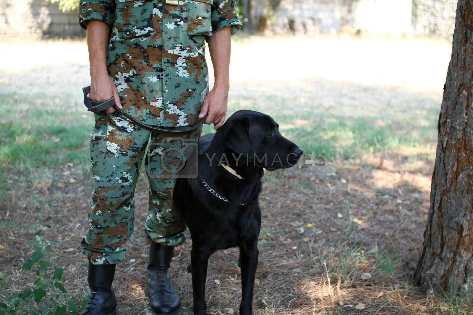 Man in military uniform with military dog, out outdoors