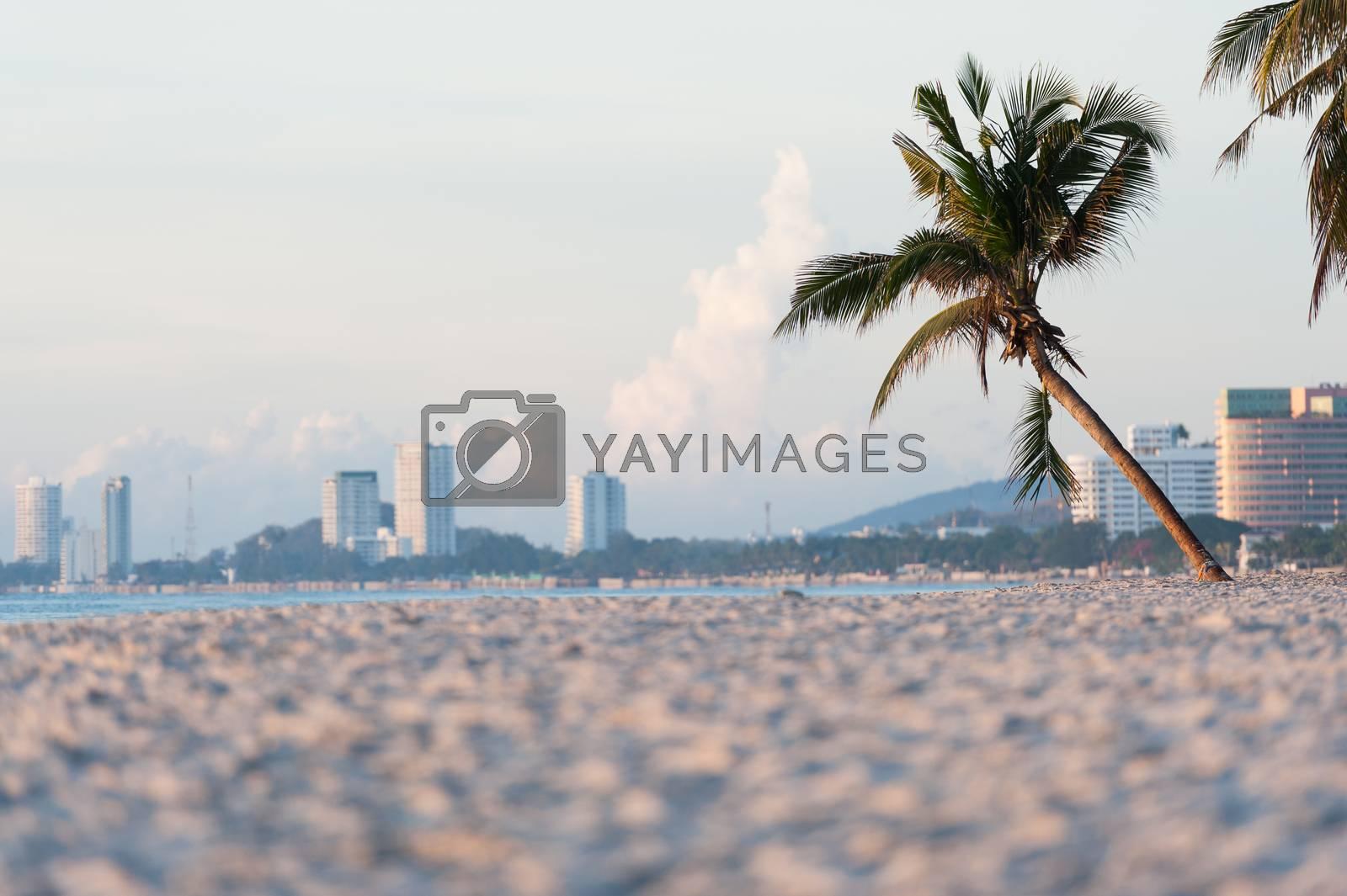 Plam tree on the beach by Surasak