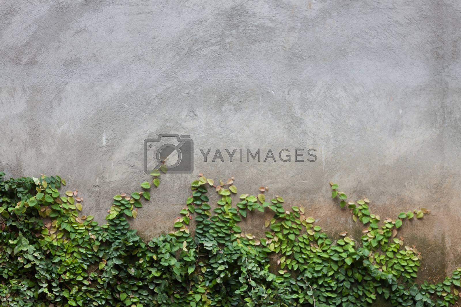 Green leaf on brick wall by punsayaporn