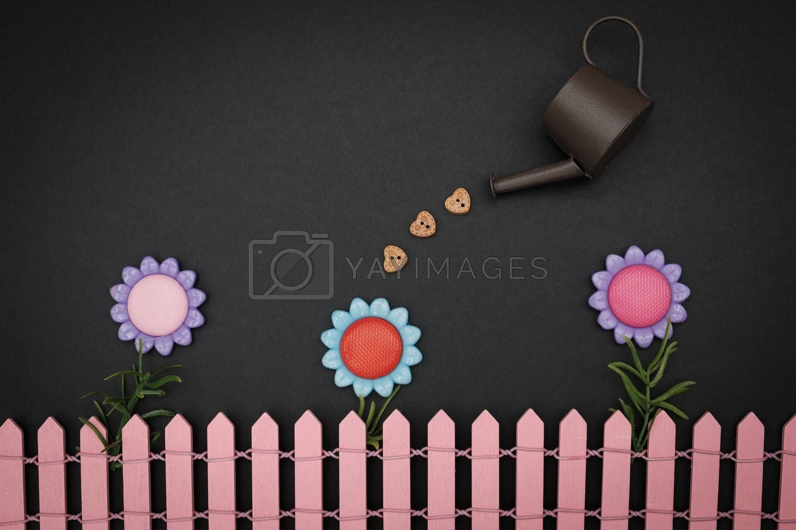 Watering a flower on black background, valentine concept. Vintage tone.
