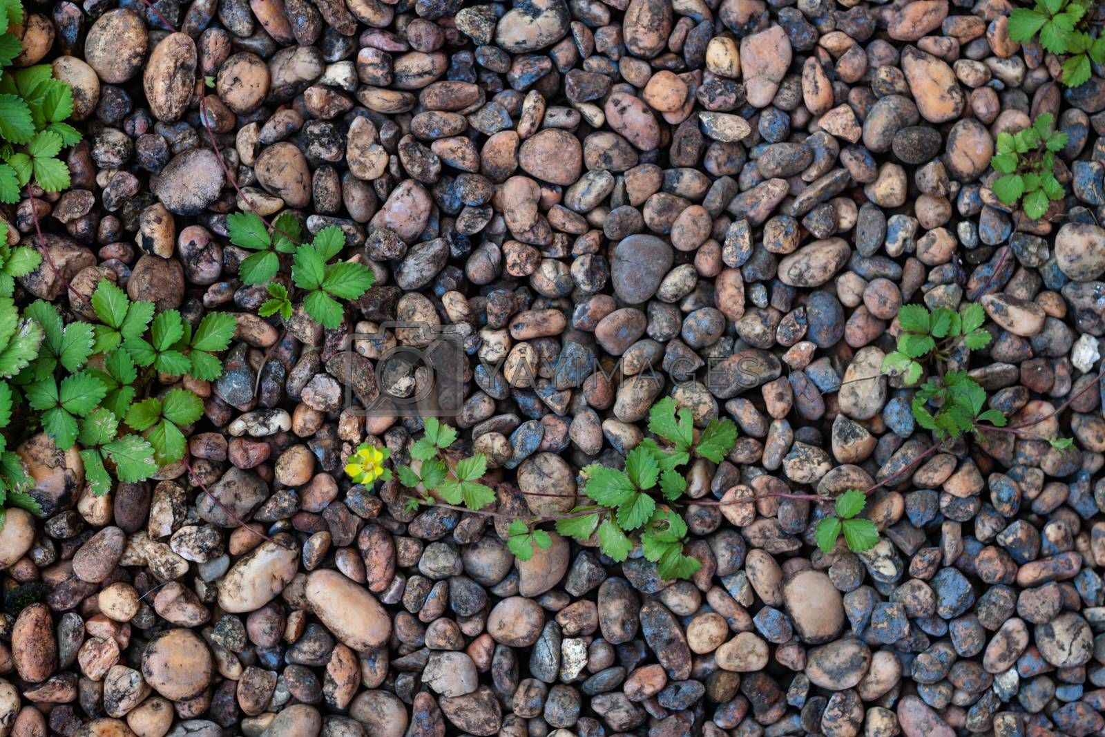 Pebble stones and bricks abstract background, stock photo