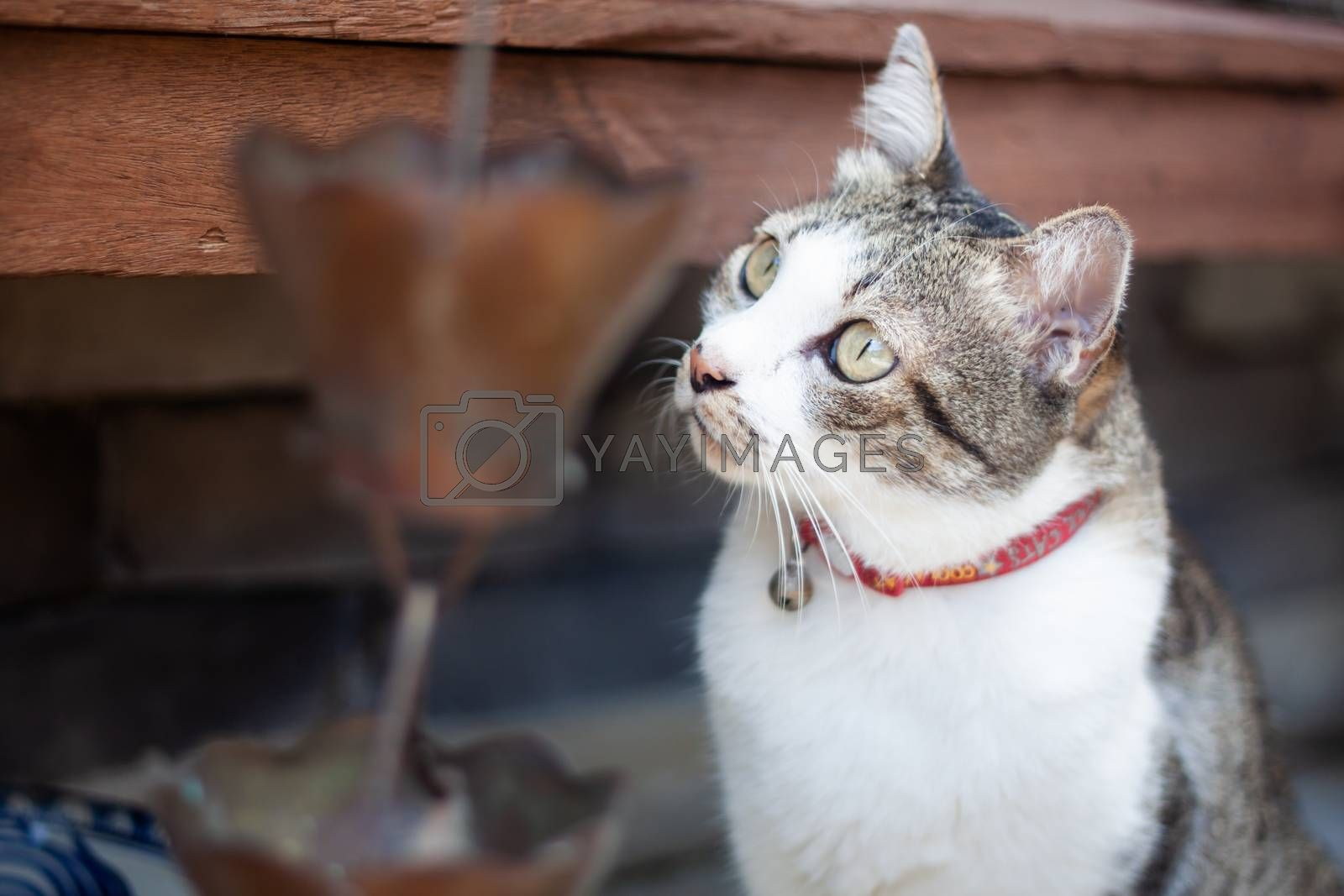 Thai cat chill in garden home by punsayaporn