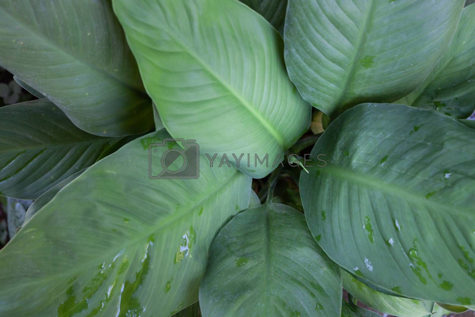 Green leaves background in garden, stock photo
