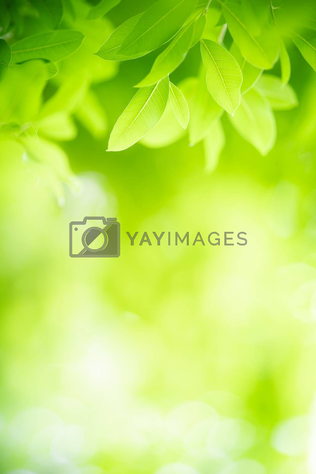 Beautiful nature view of green leaf on blurred greenery background in garden with copy space using as background natural green leaves plants landscape, ecology, fresh wallpaper concept.